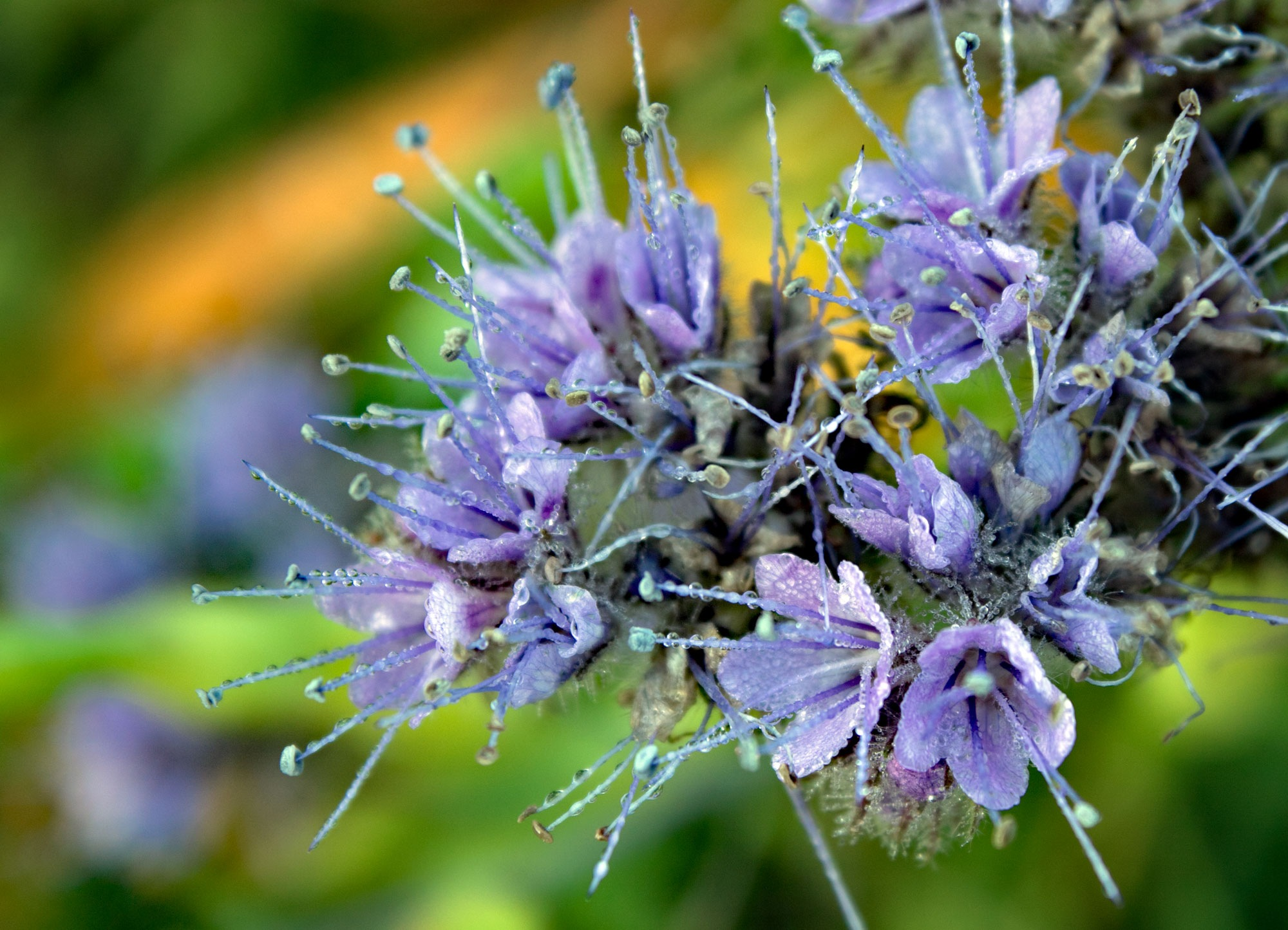 Wild Flower by Karen