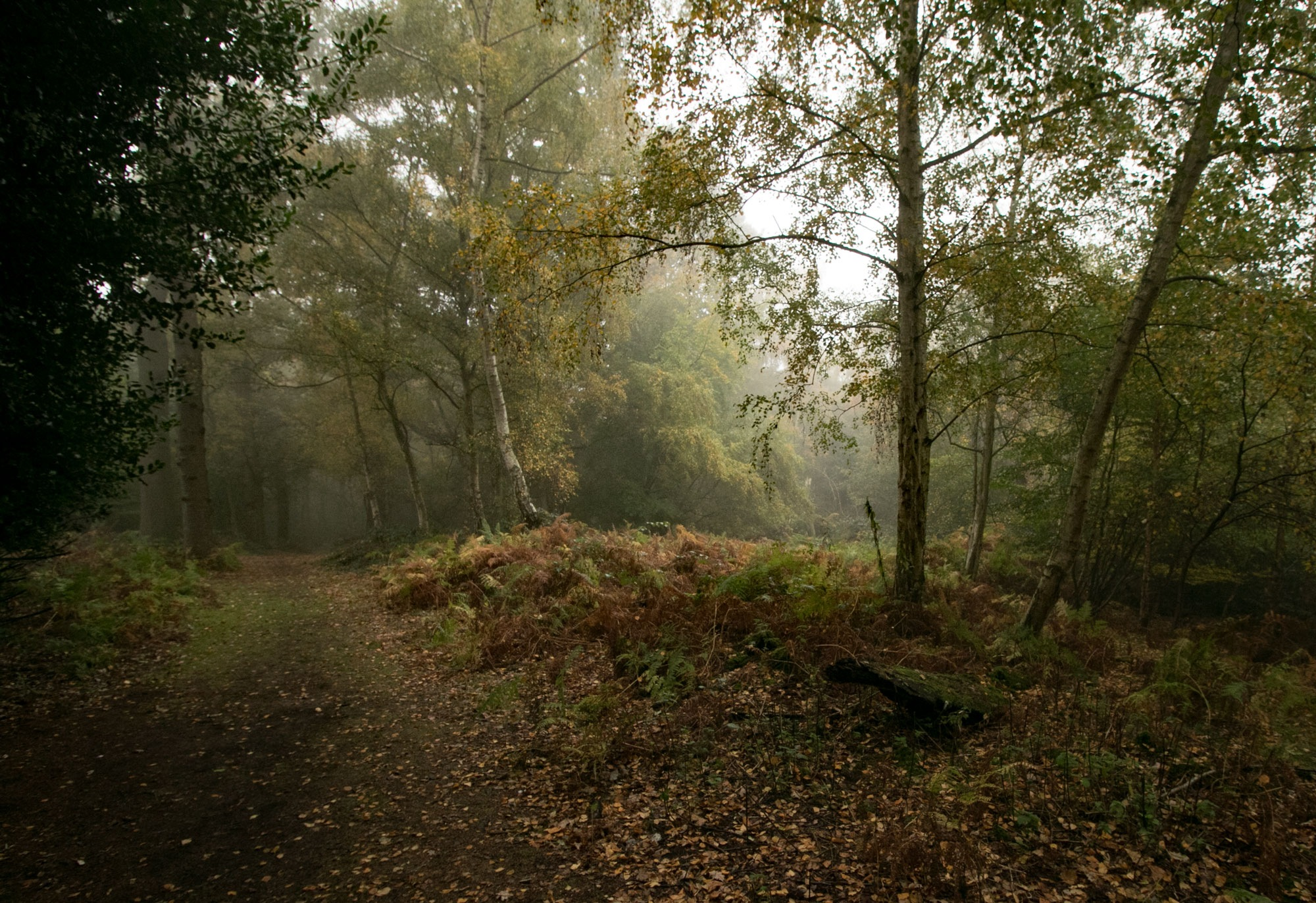 Misty Epping Forest  by Karen