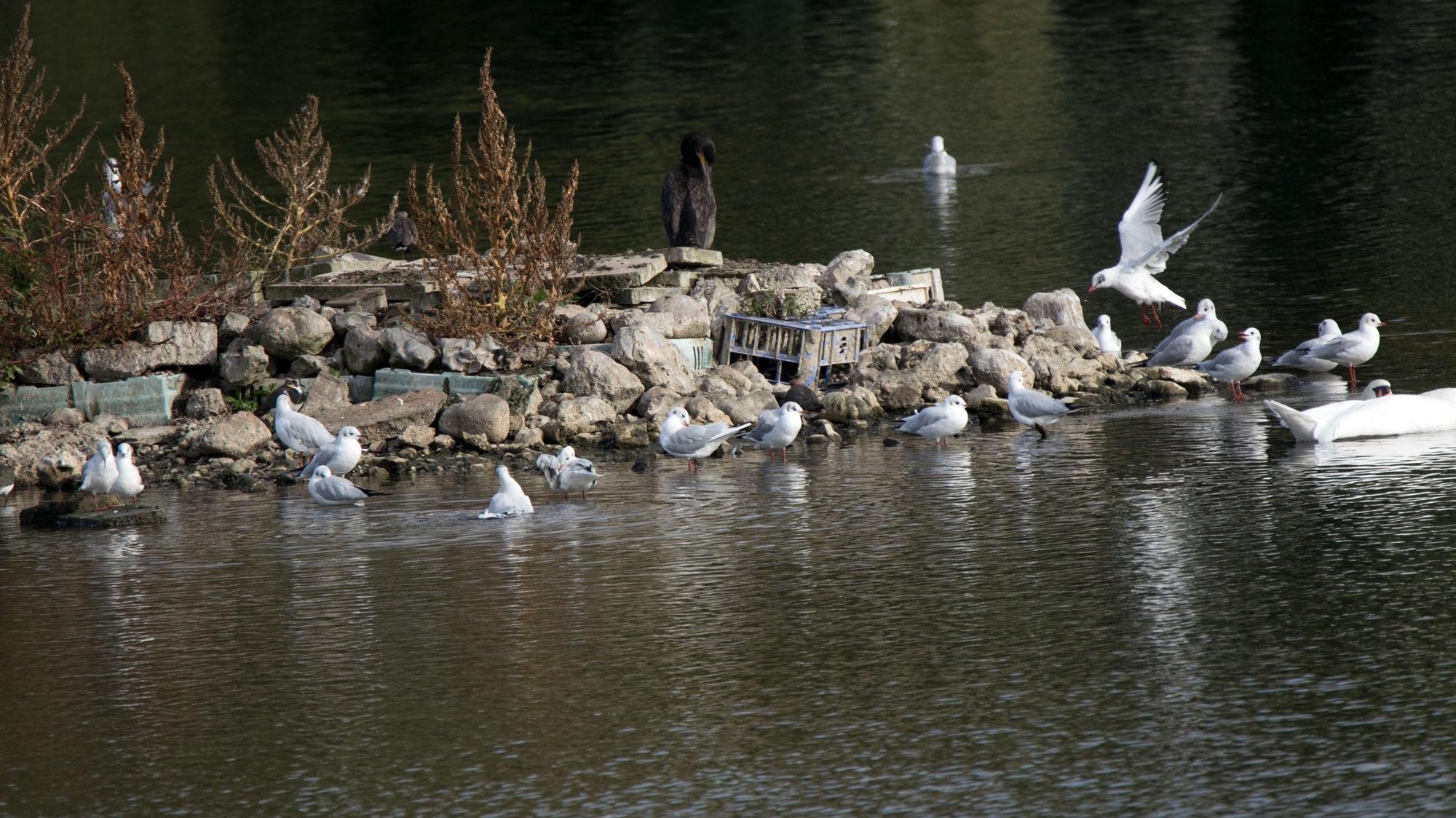 Birds on Rocks by Karen
