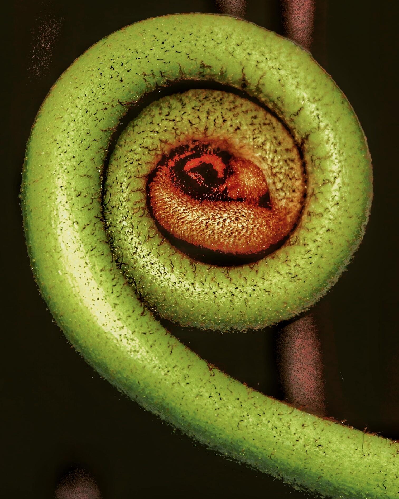 Photo in Nature #green #flower #eye #kelimutu #flores #island #chripin #mesima