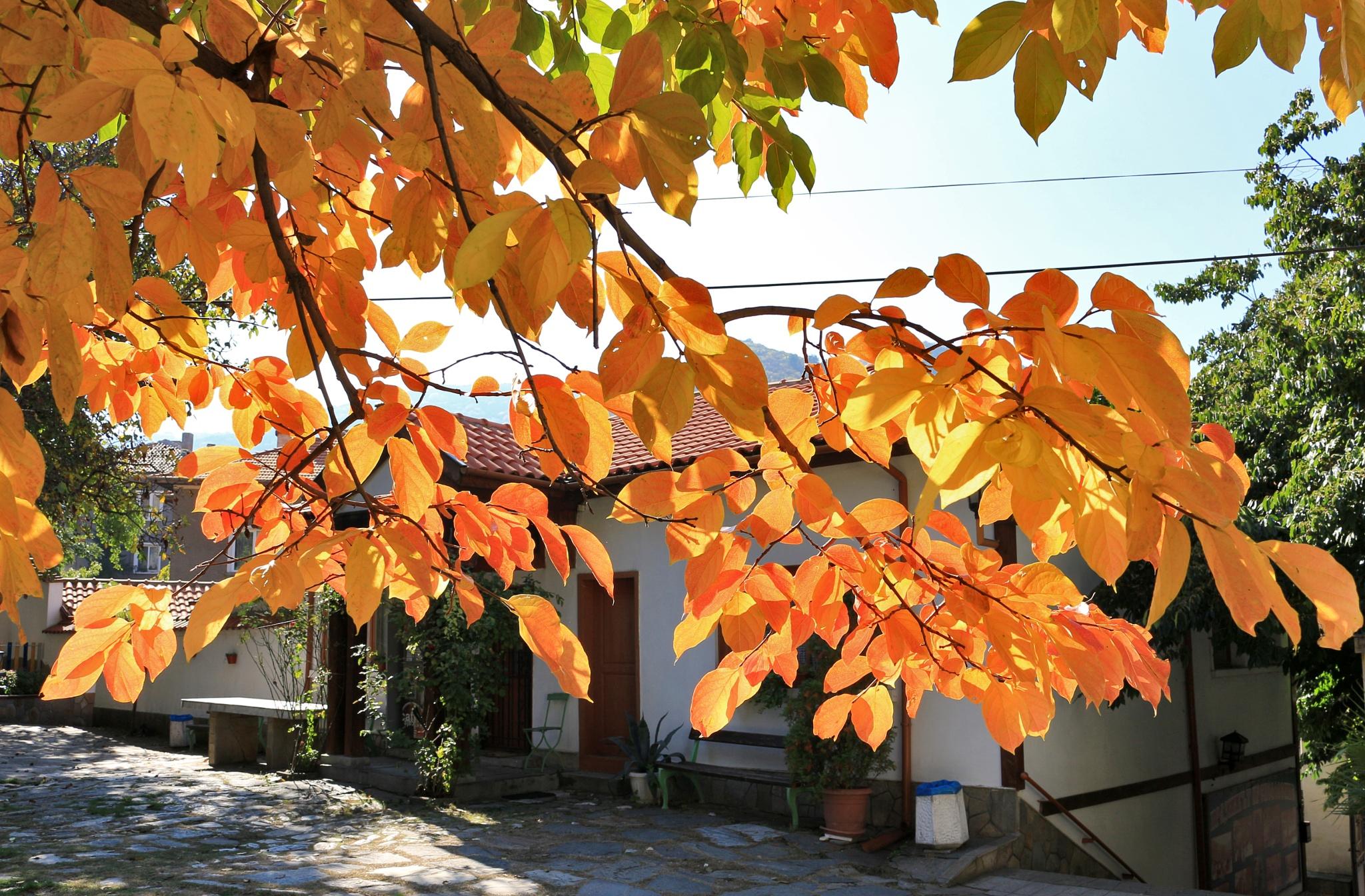 Autumn colors in the Saint Holy Virgin church garden by Sergey Sokolov