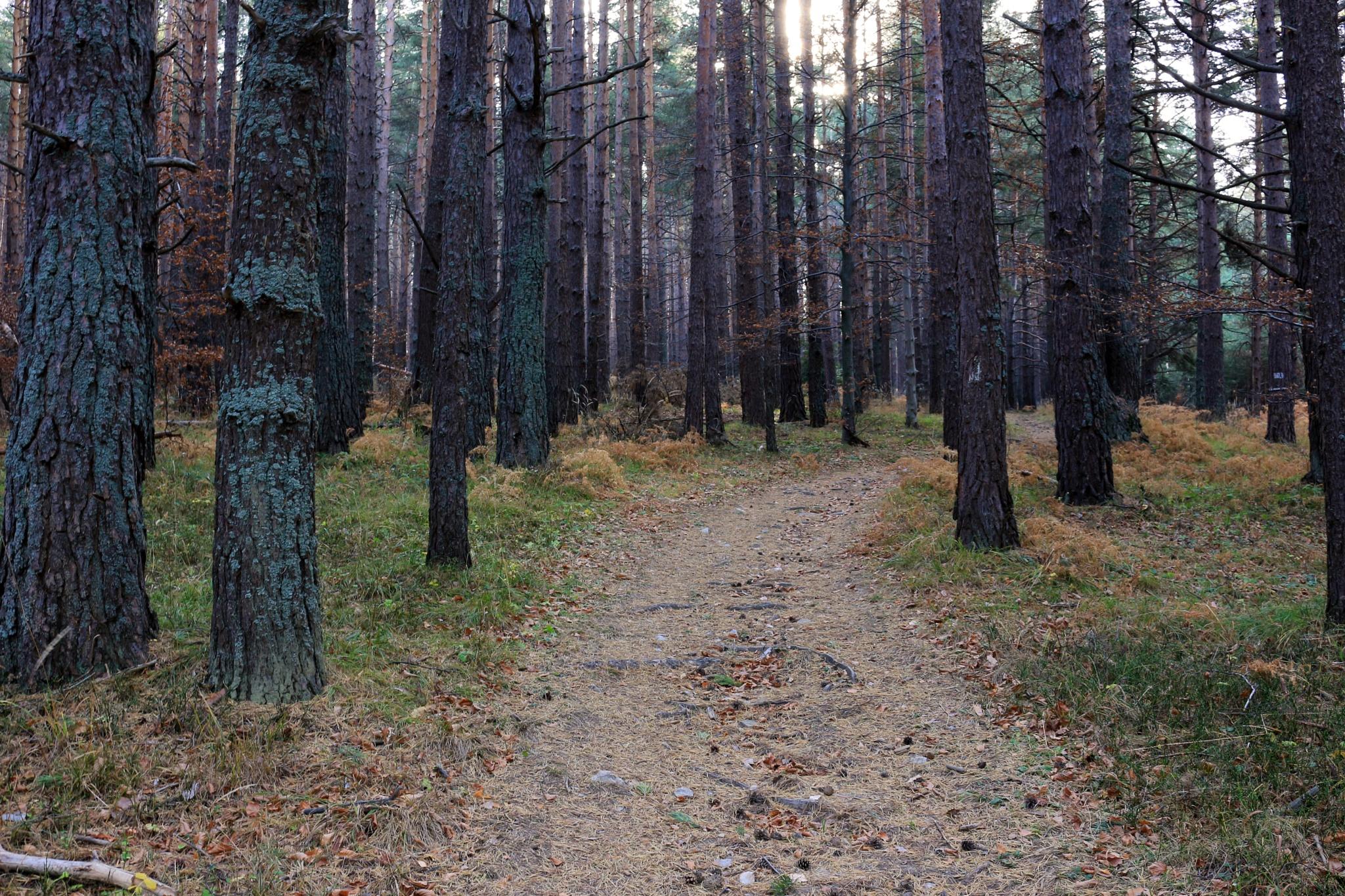 Mystic forest by Sergey Sokolov