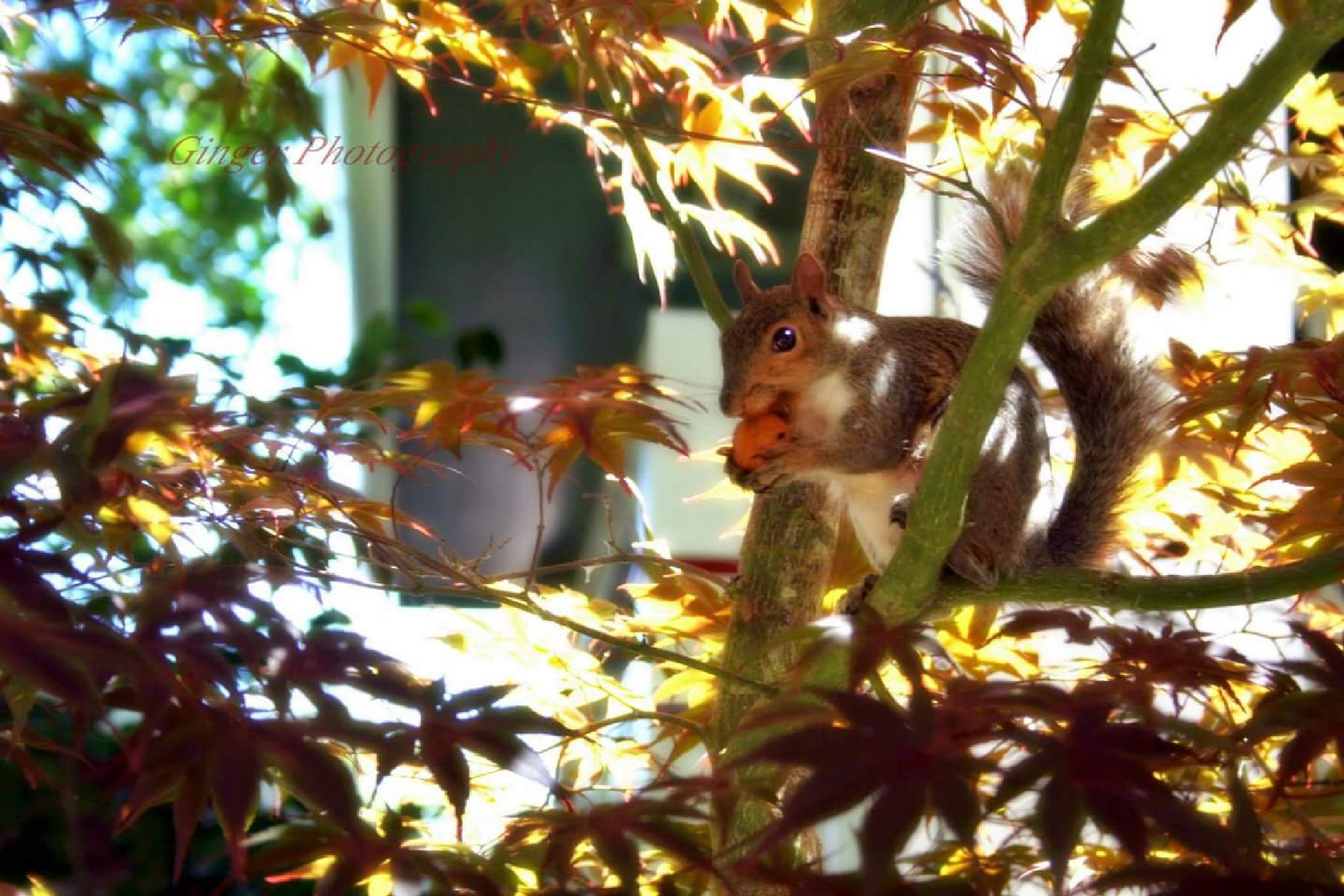 My nut by TrishaWeltz