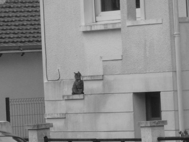 cat4 by erosmessiah