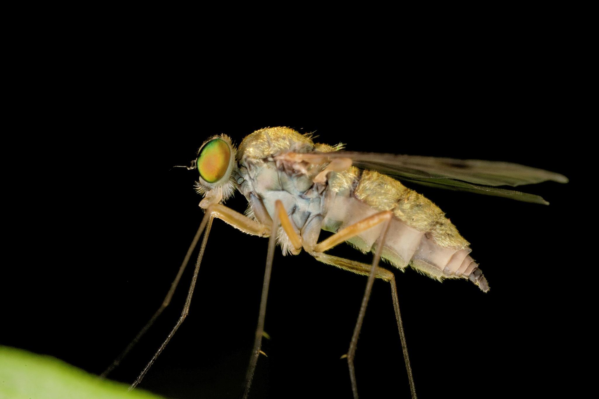 Little fly by jackdaniel