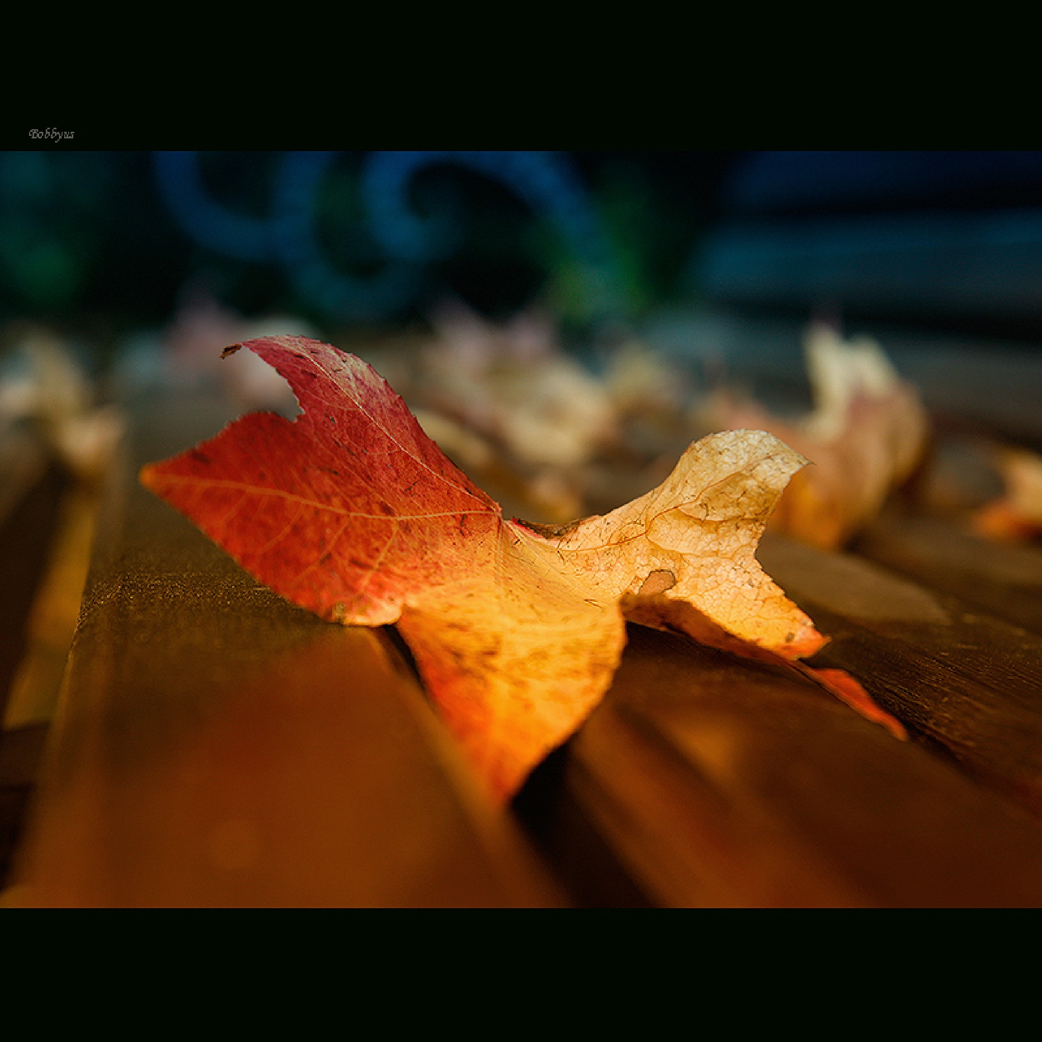 colors of autumn by Bobbyus