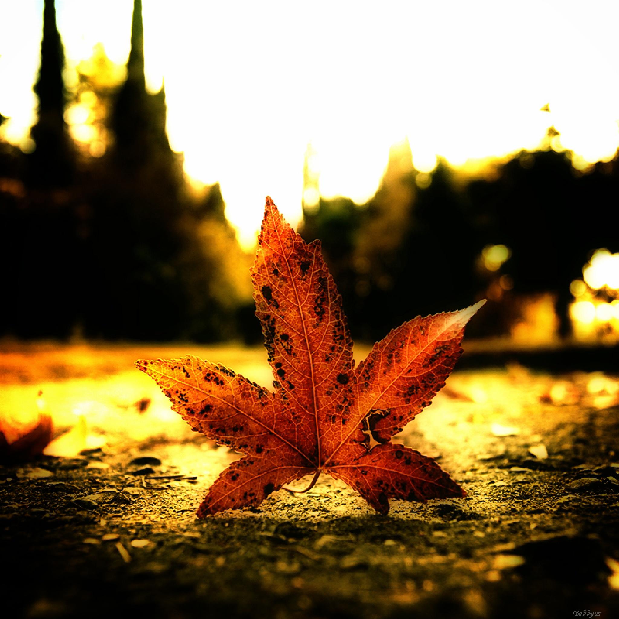 autumn leaves by Bobbyus