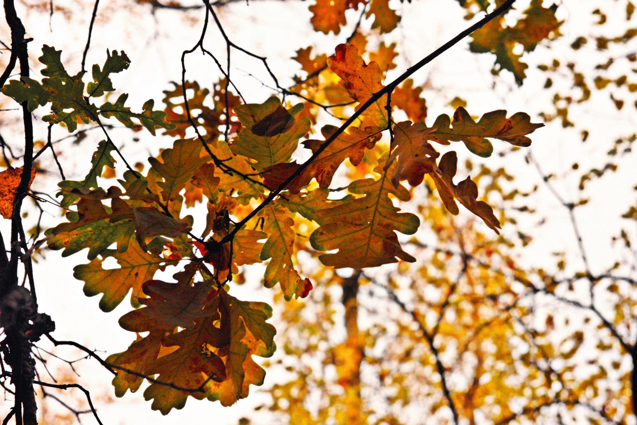Autumn forest.16 by Bobbyus