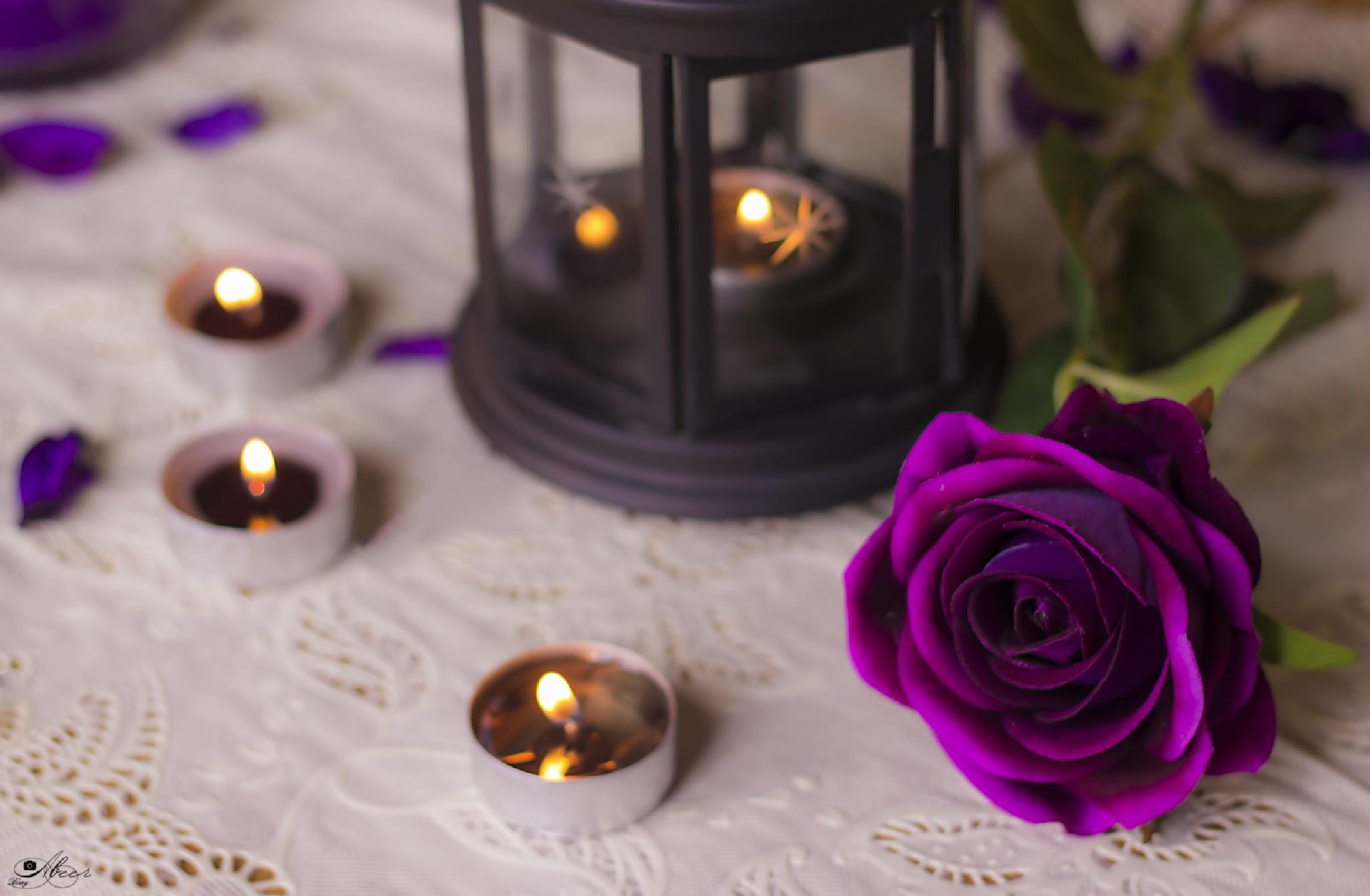 purple flower by Berry Ahmed