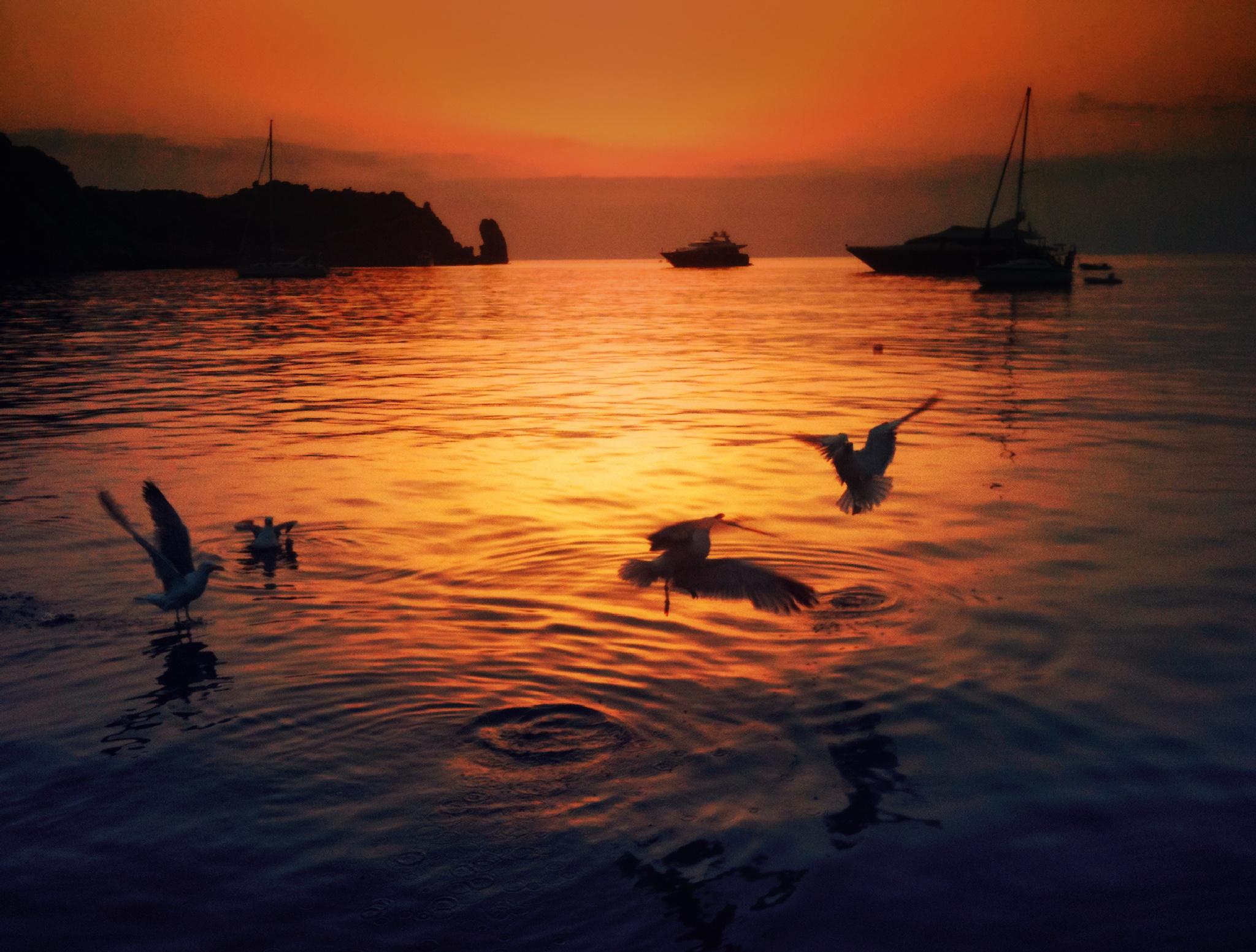 Seagulls at sunset by Roberto Scordino