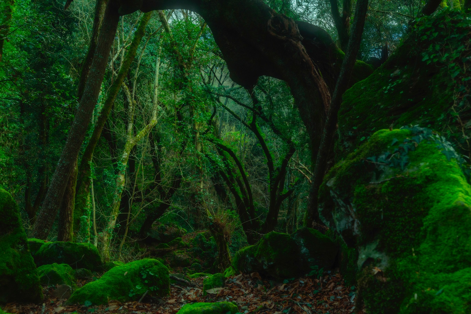 Enchanted Forest 5/5 by Roberto Scordino