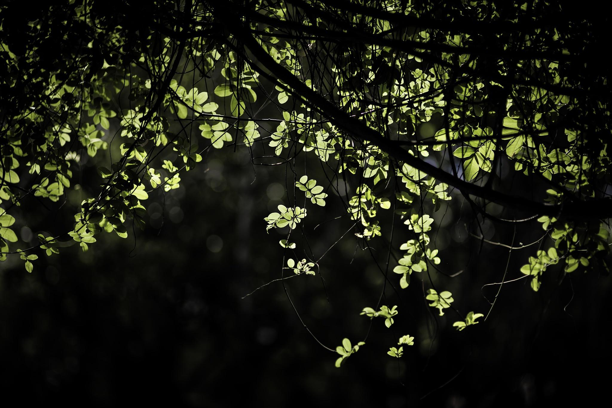 green leaf by iloveubon