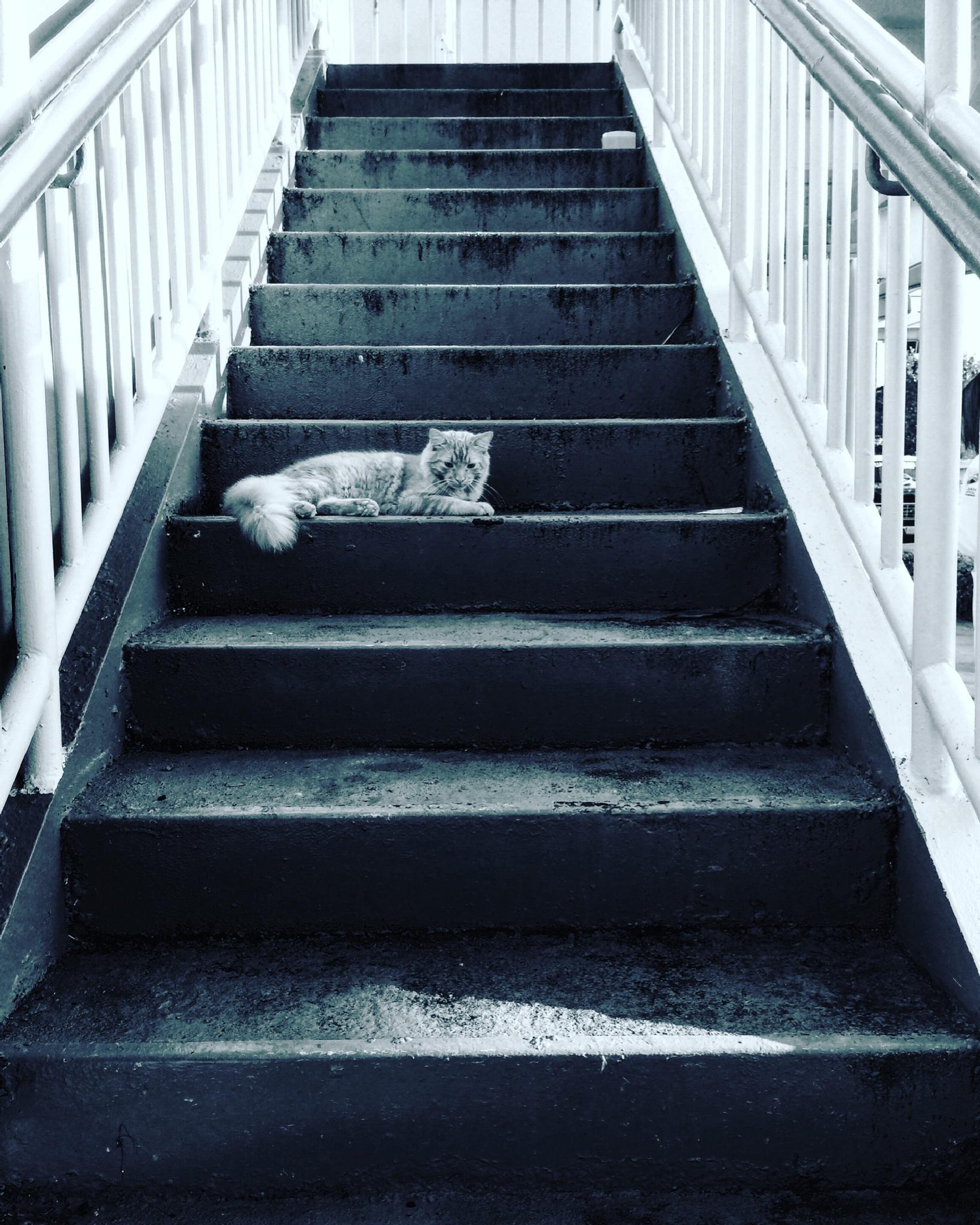 Cat on stairs by Nilda64pr