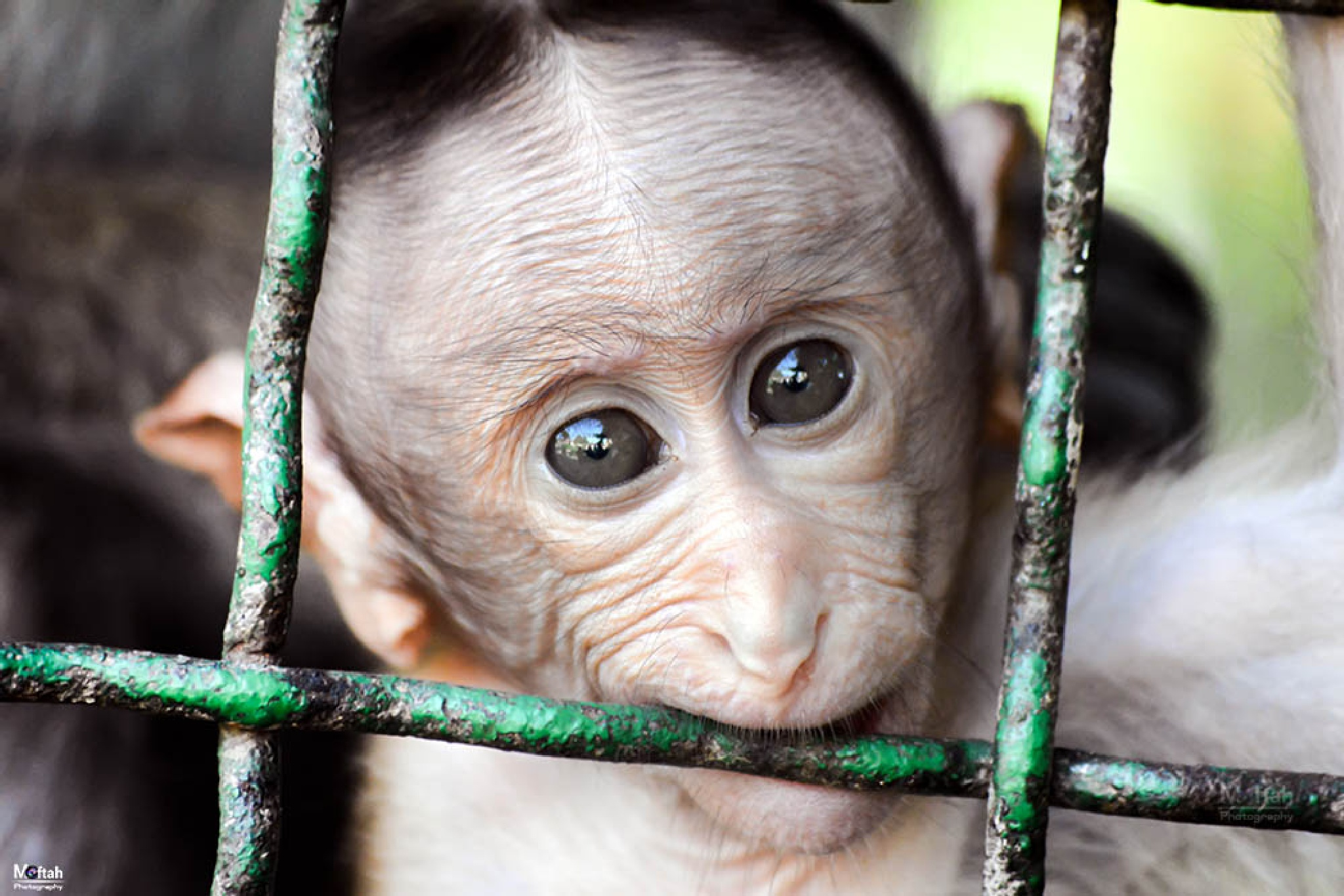 Monkey sad eyes by Abdallah Gamal