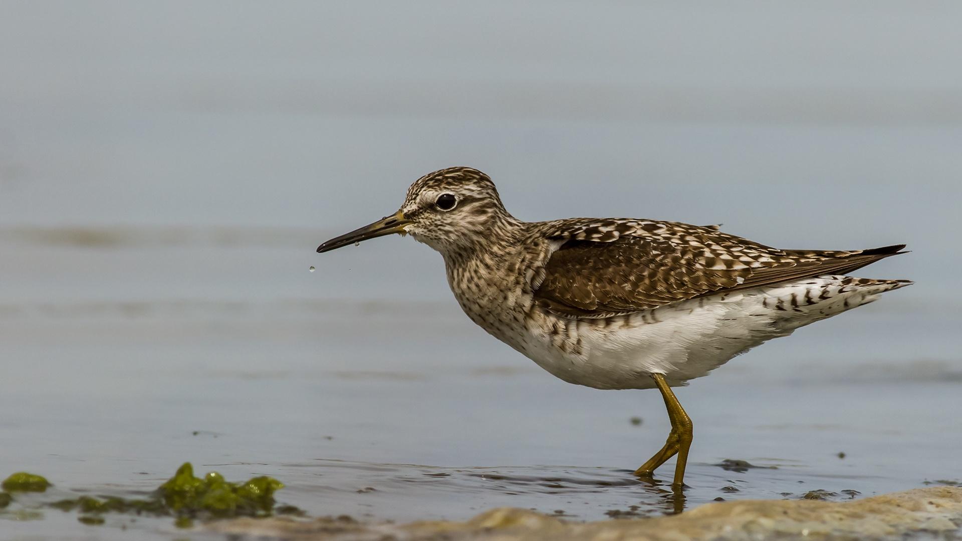 migratory bird... by sezaigoksu