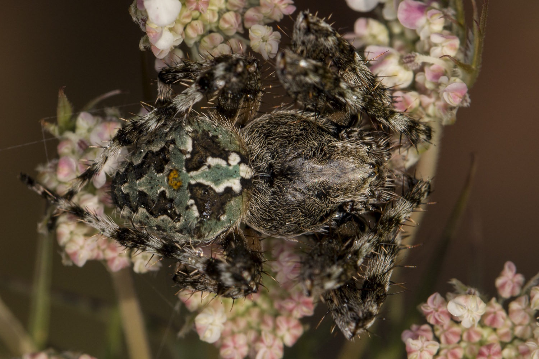 Spider by NAMIK KEMAL KORTAN