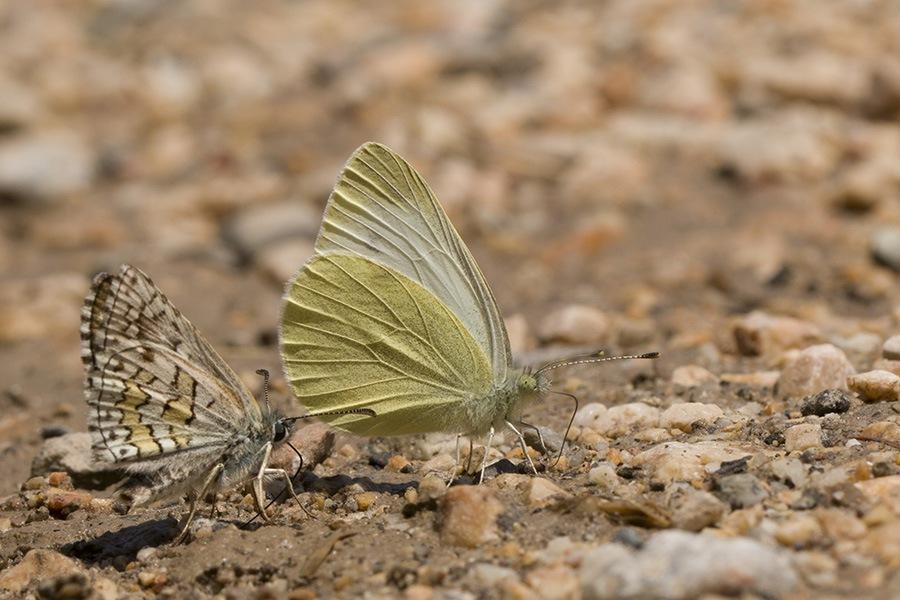 Buterflies by NAMIK KEMAL KORTAN