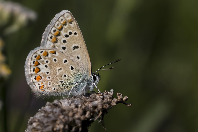 Butterfly by NAMIK KEMAL KORTAN