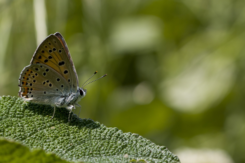 Butterflies are free.. by NAMIK KEMAL KORTAN