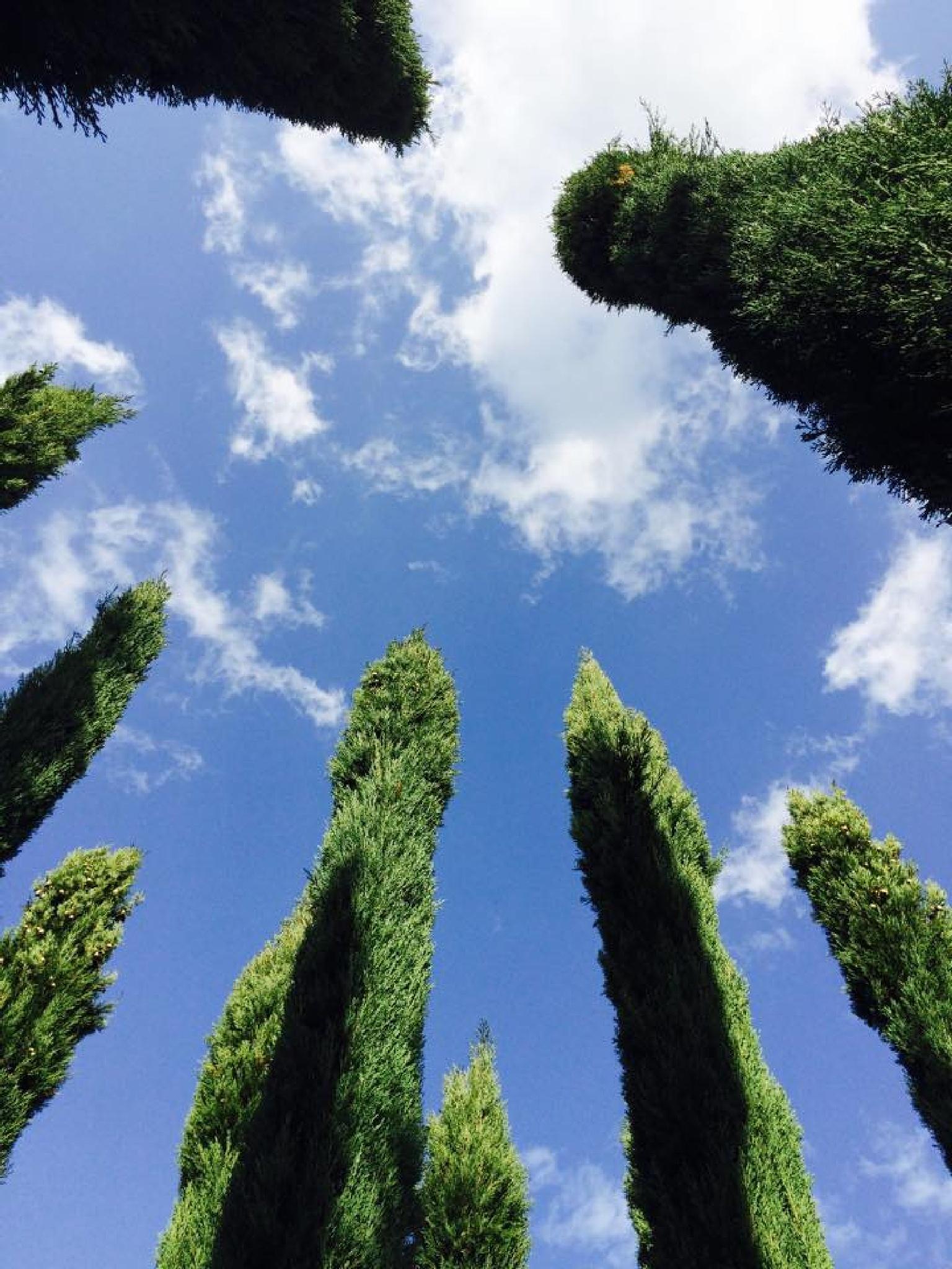 uzbas arboretum by Tarkan Oktay