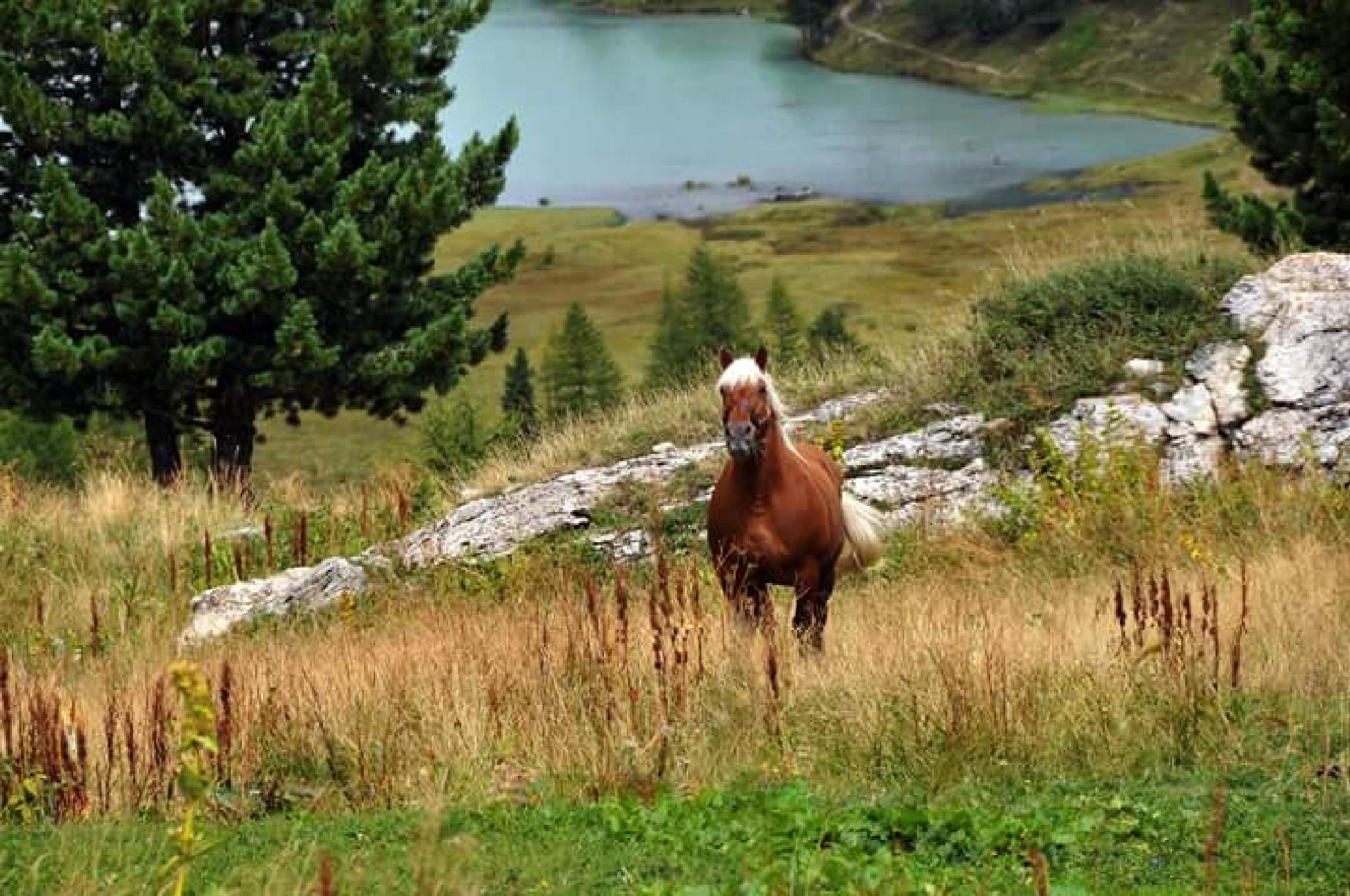 Horse  by makrita