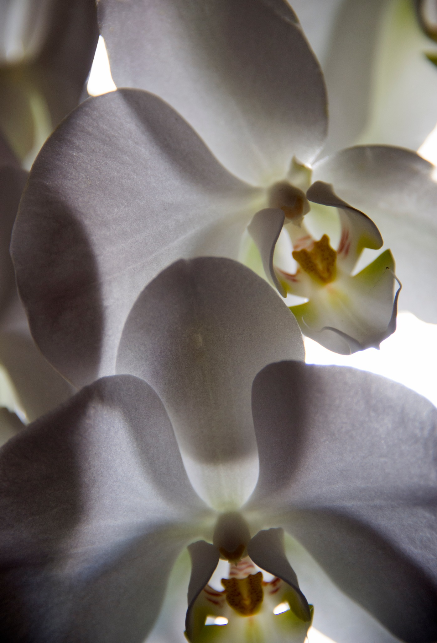 Orchid with sun behind by Graham Levi