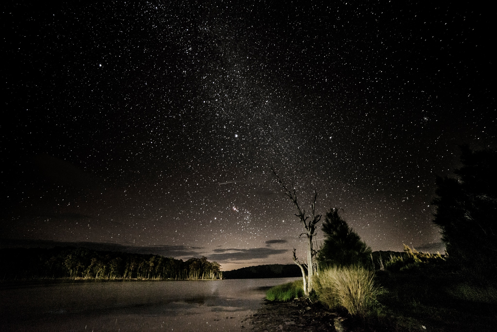 Lake and Tree Under the Stars by Graham Levi