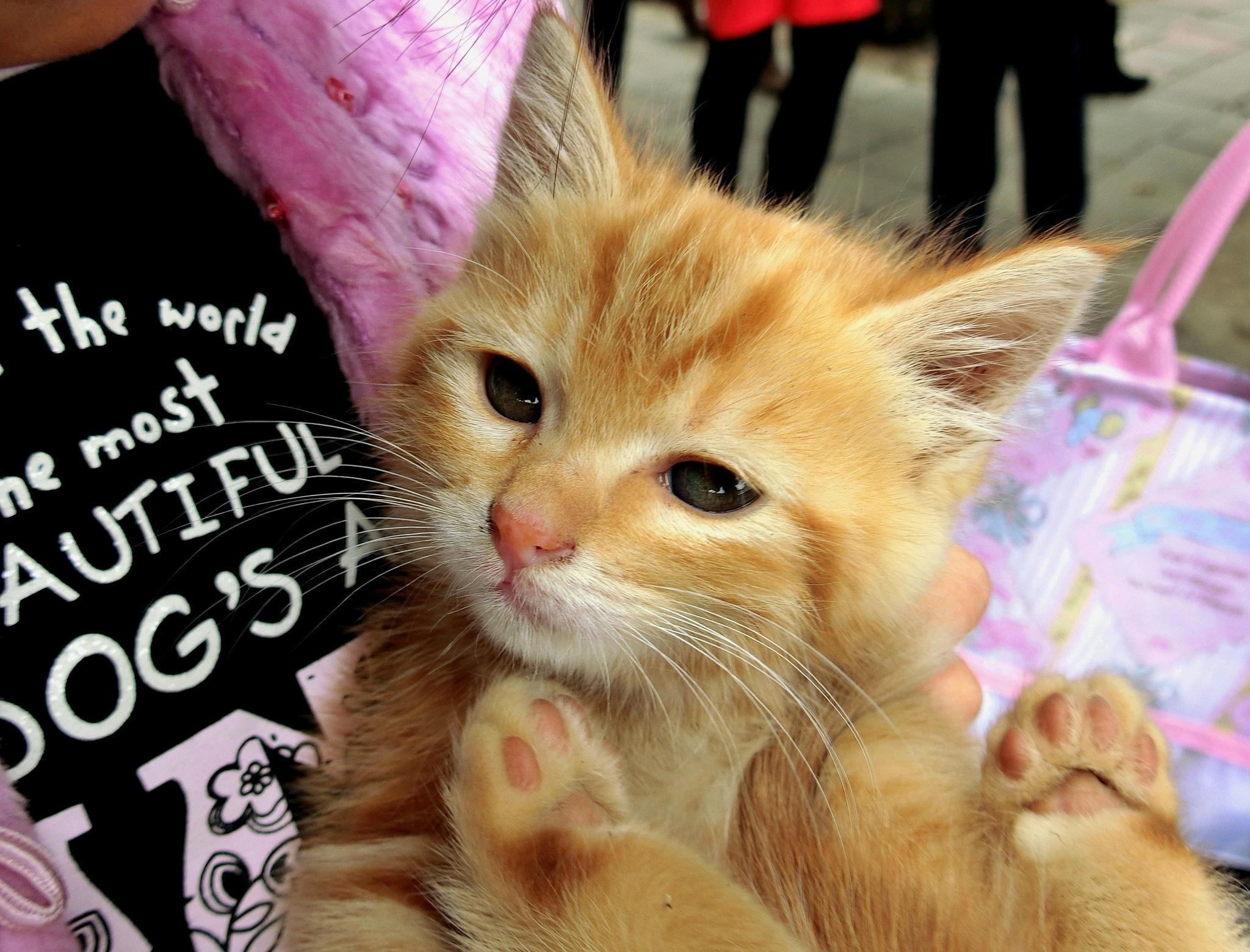 Kitten at Nam Sang Wai  by pop88123