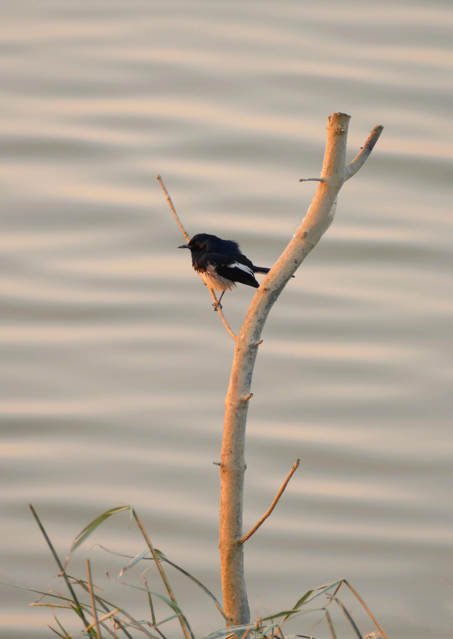 Bird-1 by pop88123