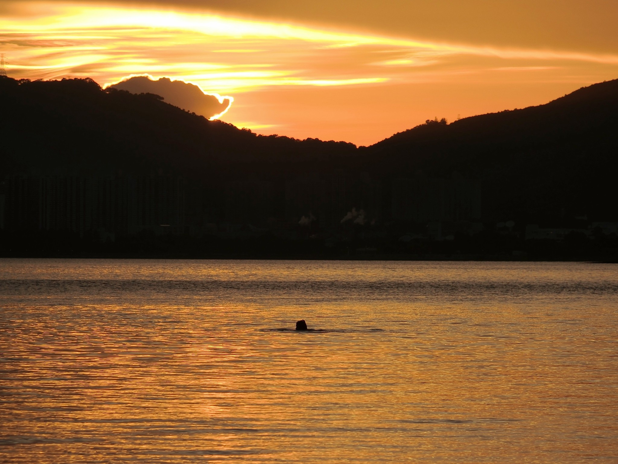 Lone swimmer at sunset by pop88123