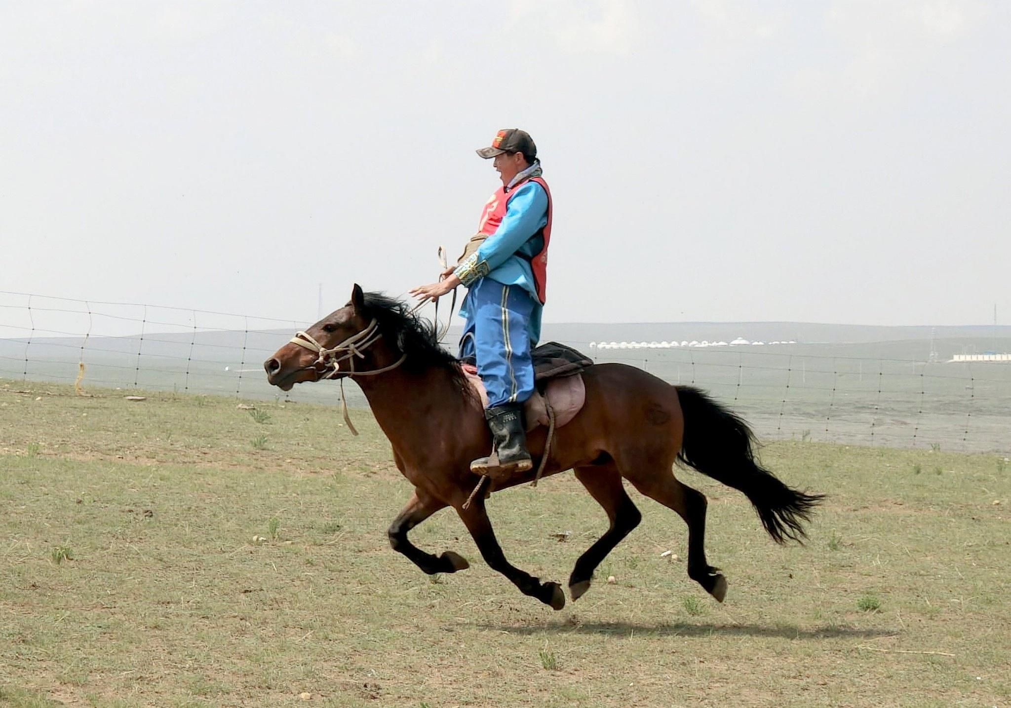 Inner Mongolia horse by pop88123
