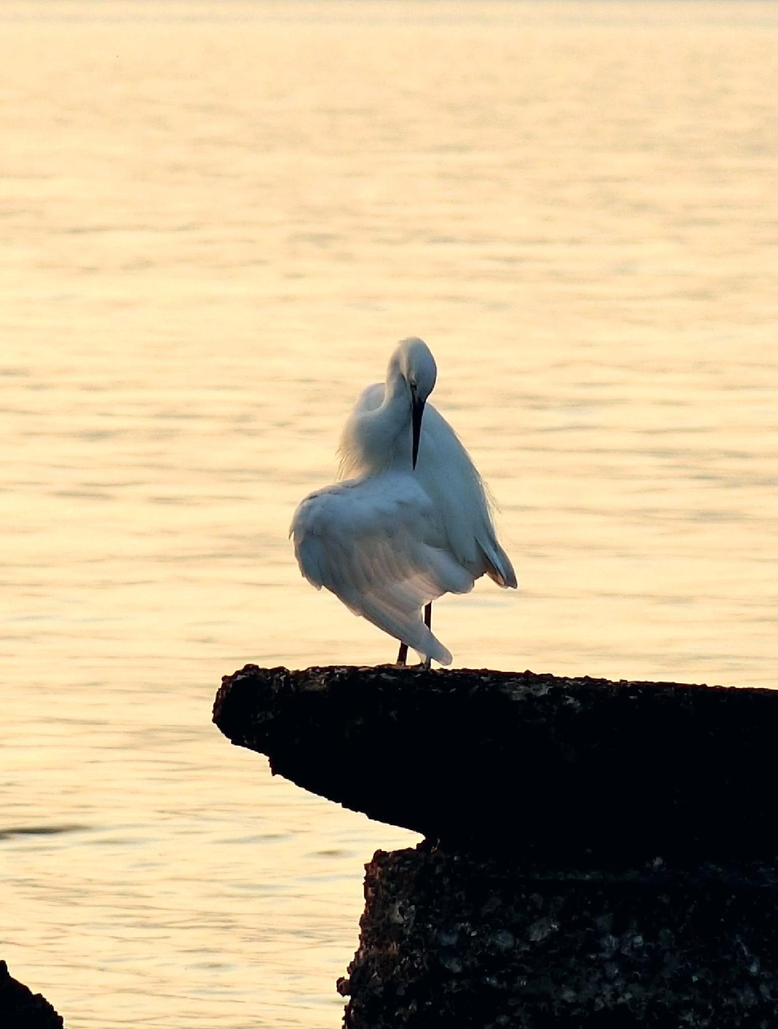 Lone egret at sunset, Wu Kai Sha by pop88123