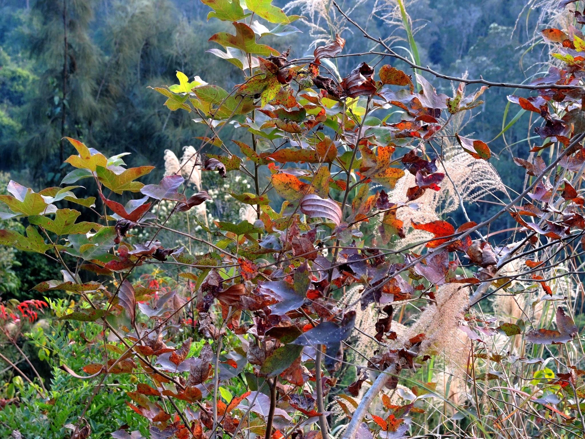 Leaves at Tai Tong Park by pop88123