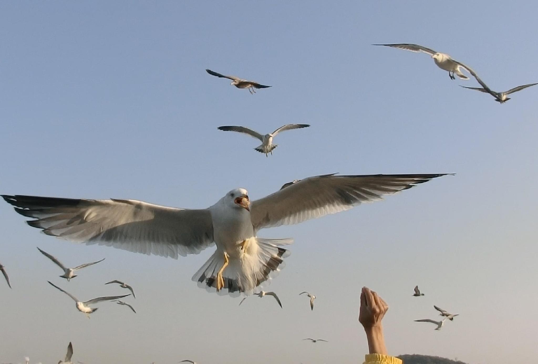 Feeding seagulls at Wolmido, Seoul by pop88123