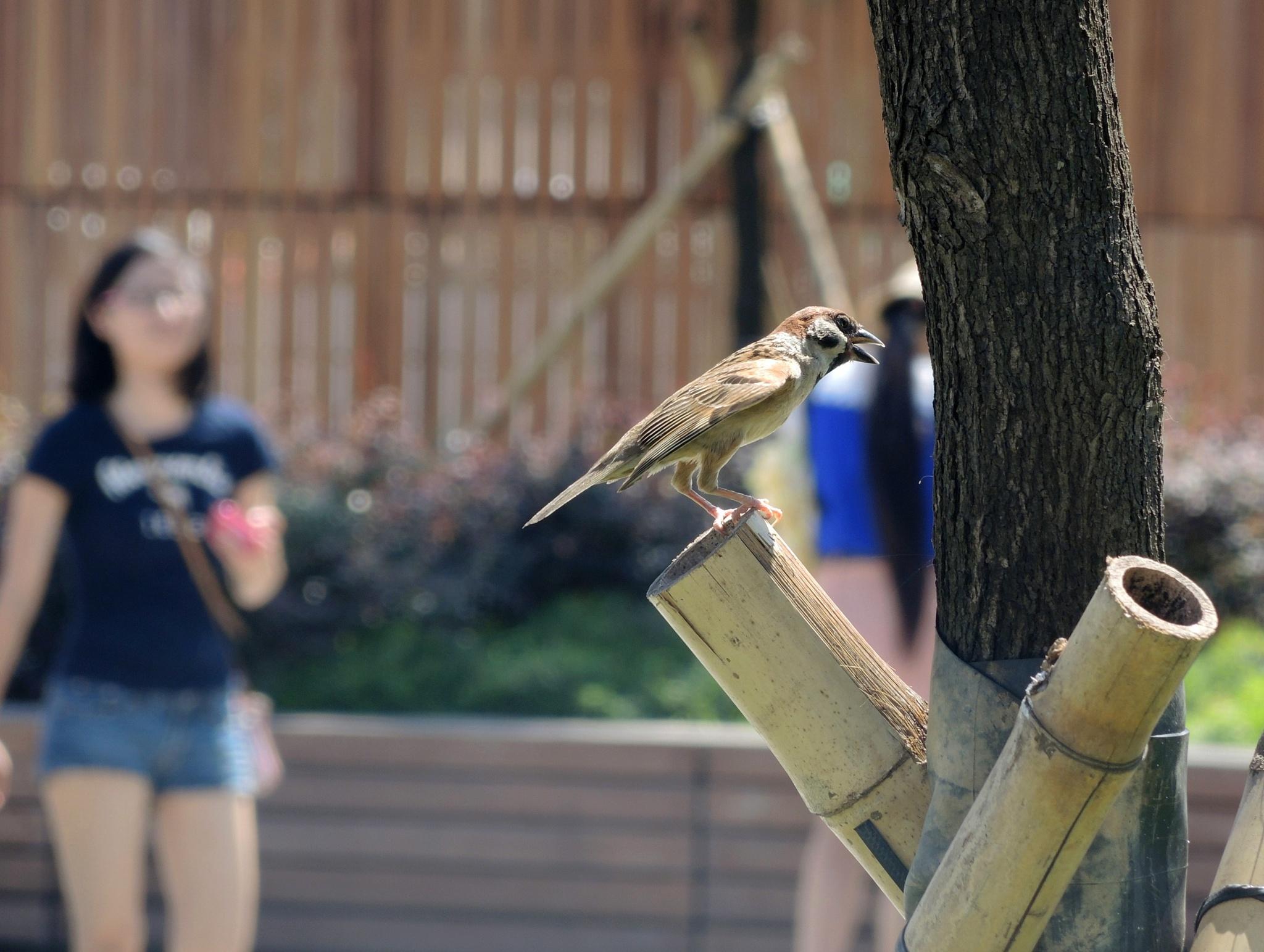 Sparrow at Tsimshatsui, Hong Kong by pop88123