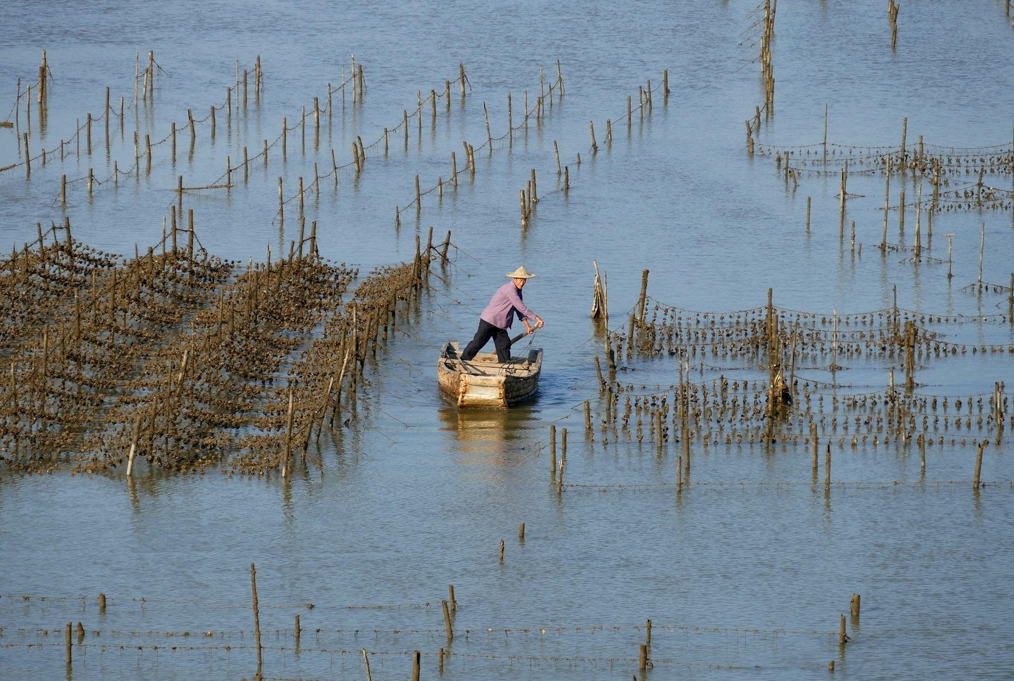 Shellfish farmer, Xia Qing Shan-2 by pop88123