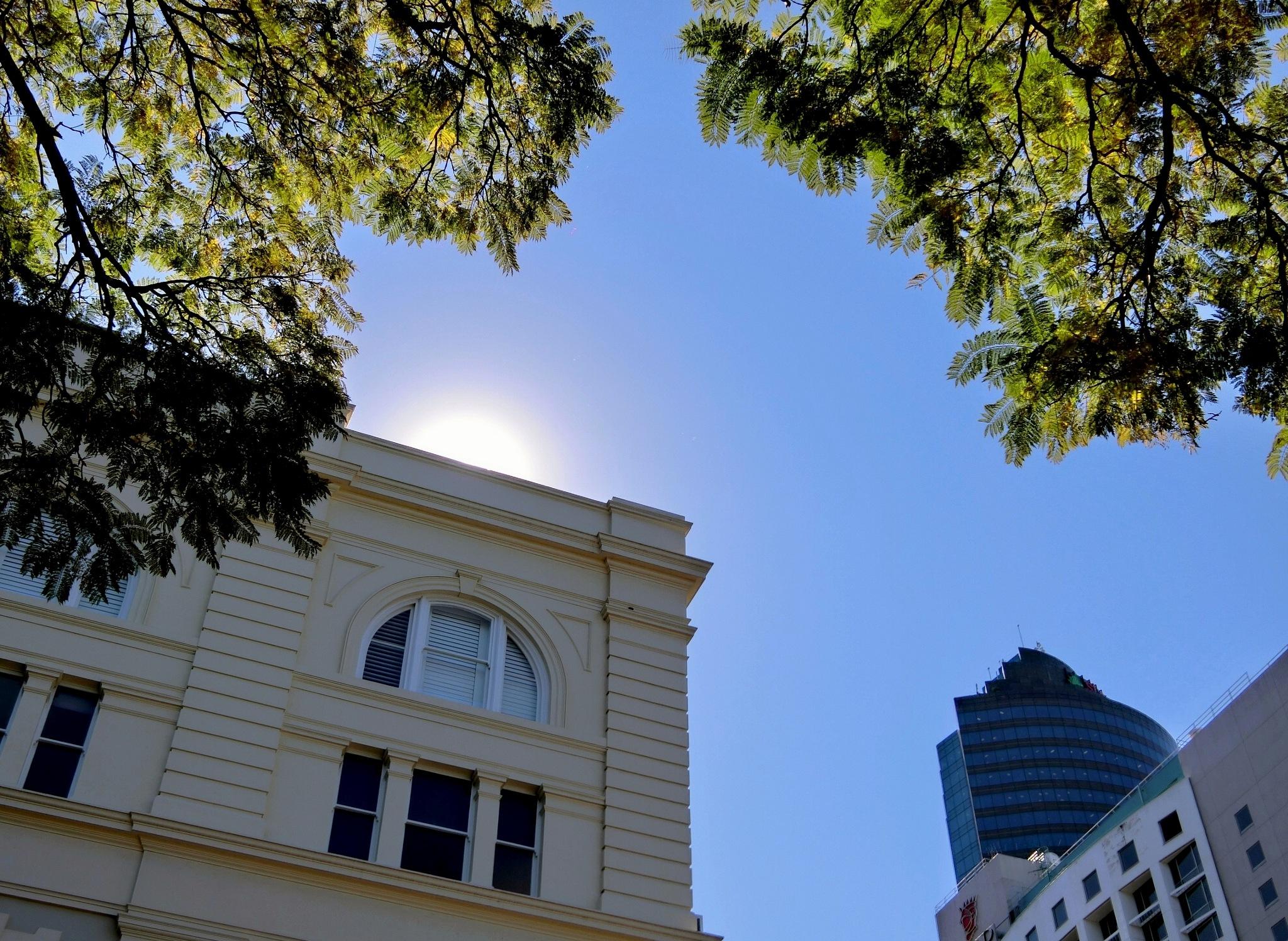 Brisbane Botanic Garden-4 by pop88123