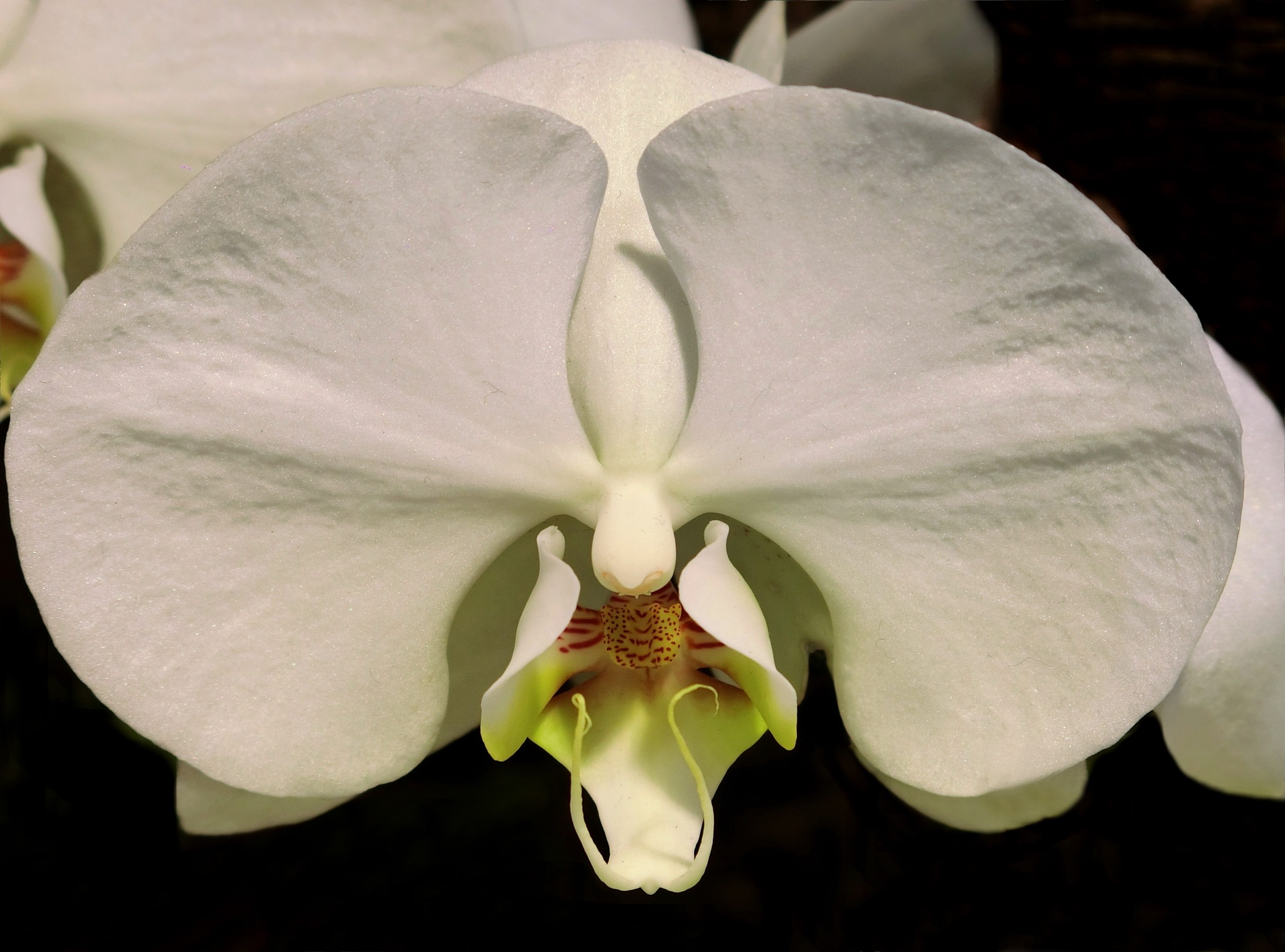 Orchid-2 by pop88123