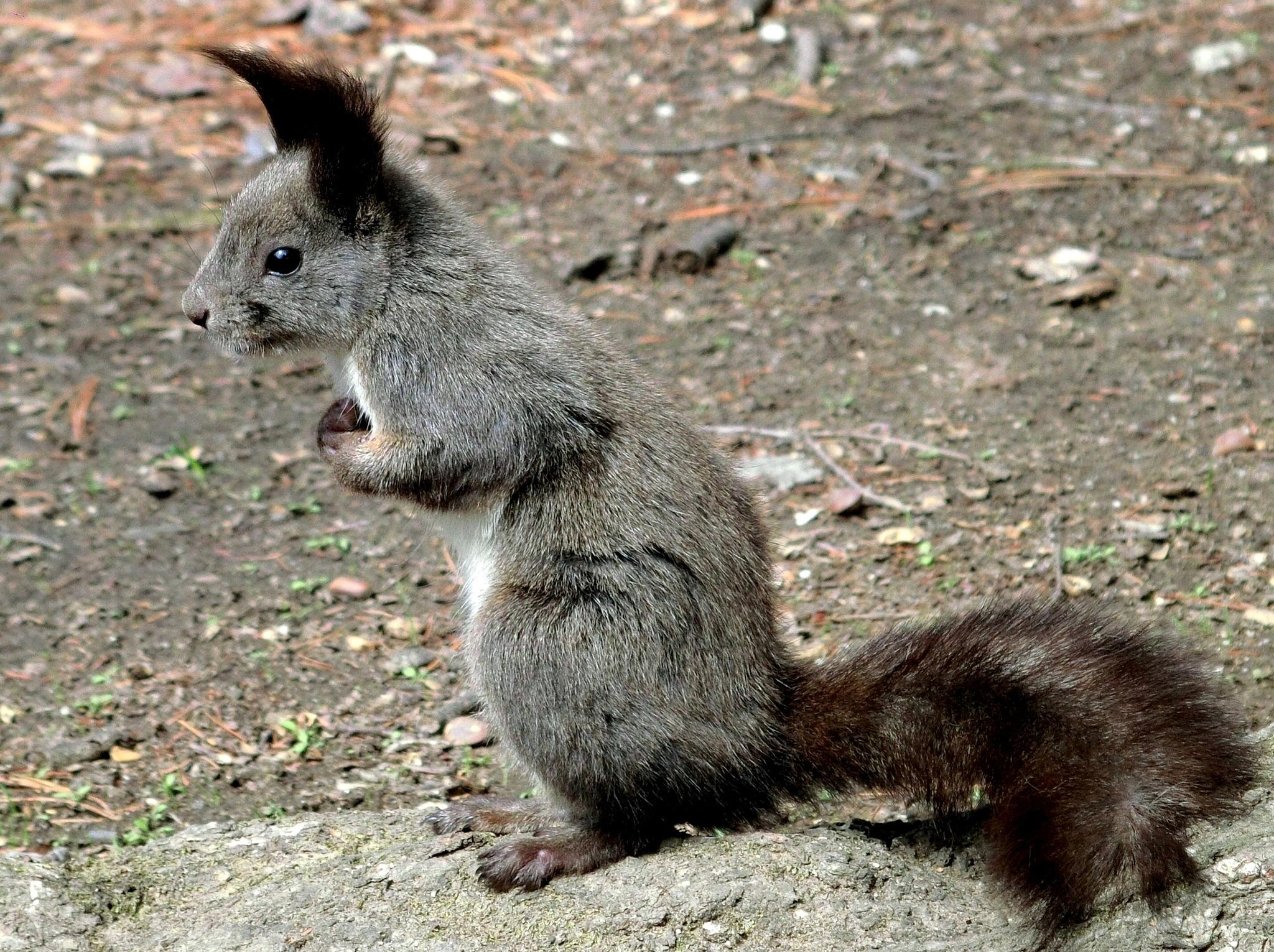 Squirrel-2 by pop88123
