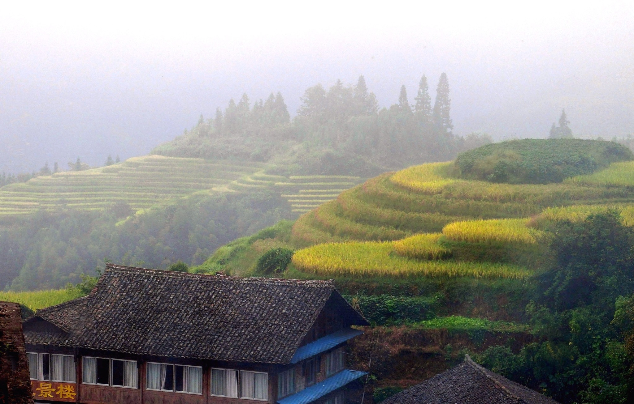 Longji Rice Terraces-5 by pop88123