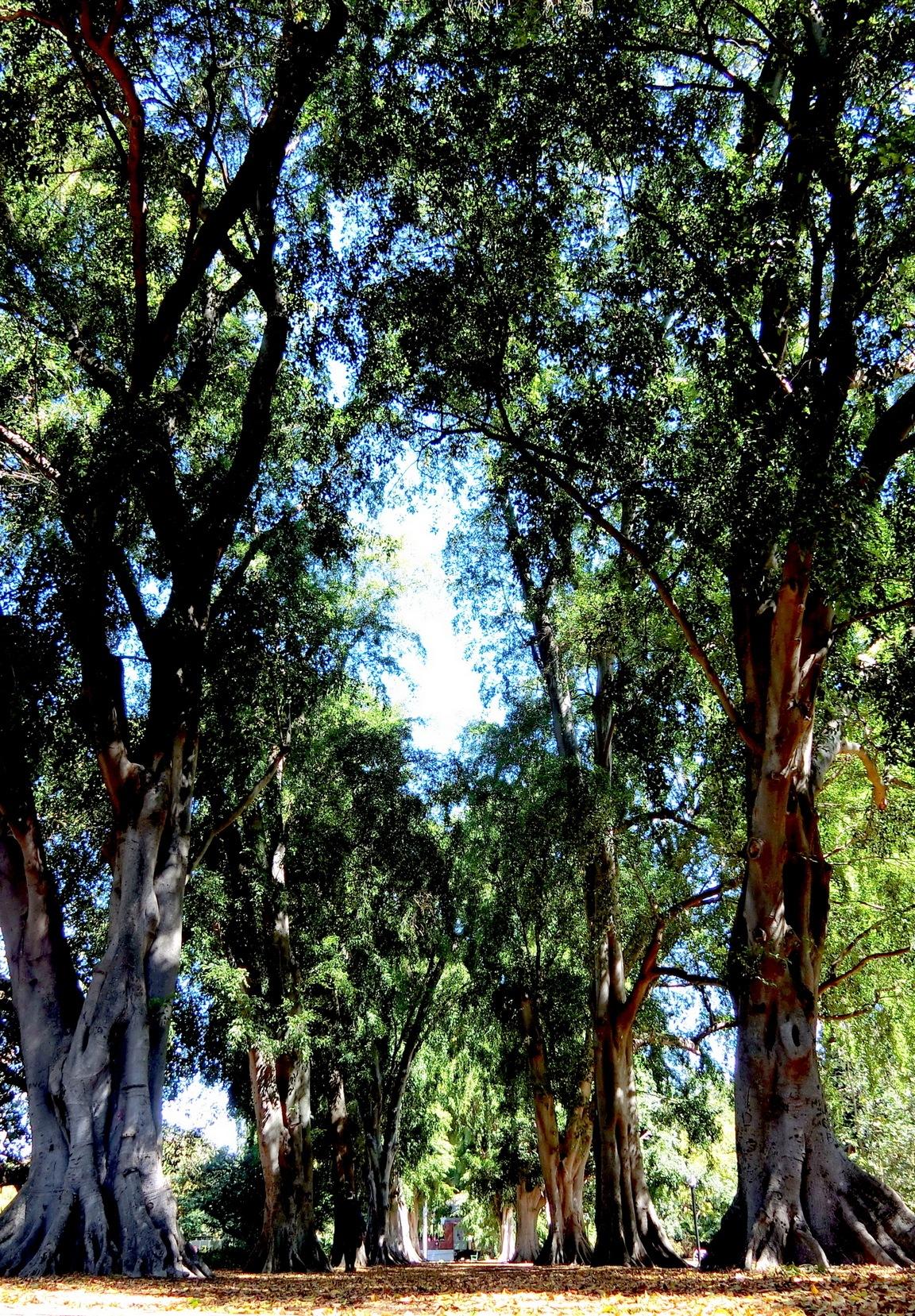 Brisbane Botanic Garden-2 by pop88123