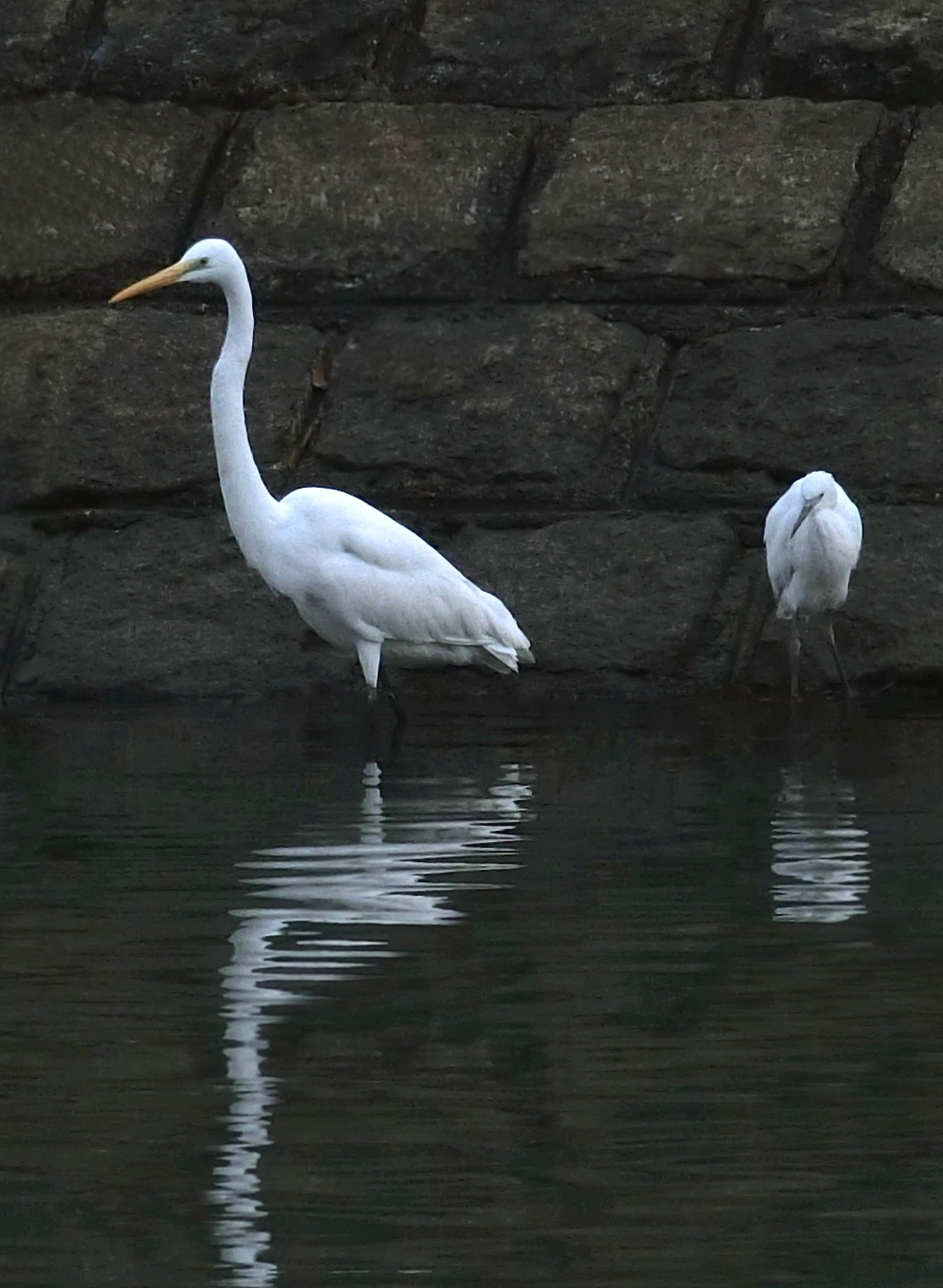 Great Egret and Little Egret by pop88123