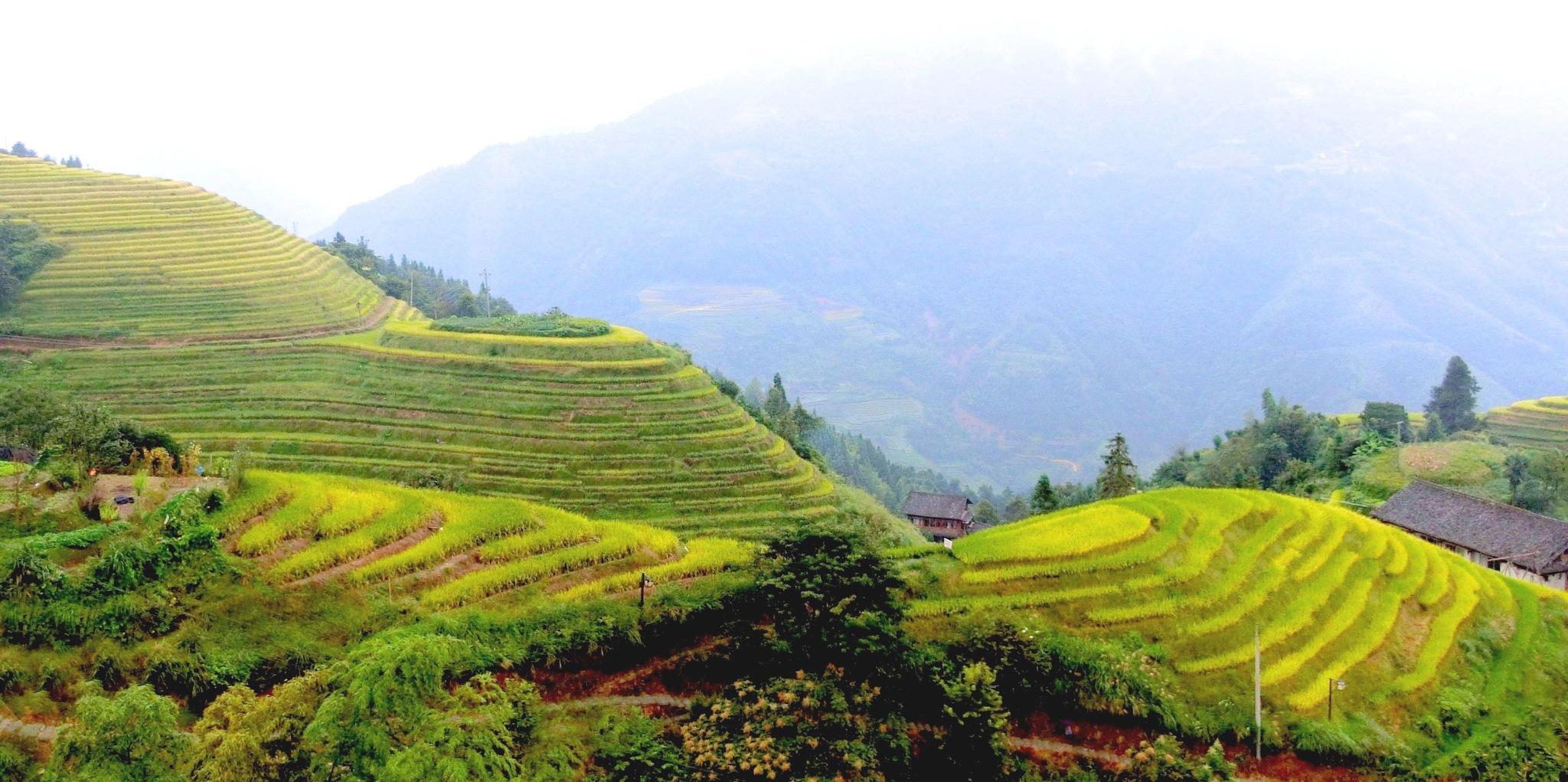 Longji Rice Terraces-9 by pop88123