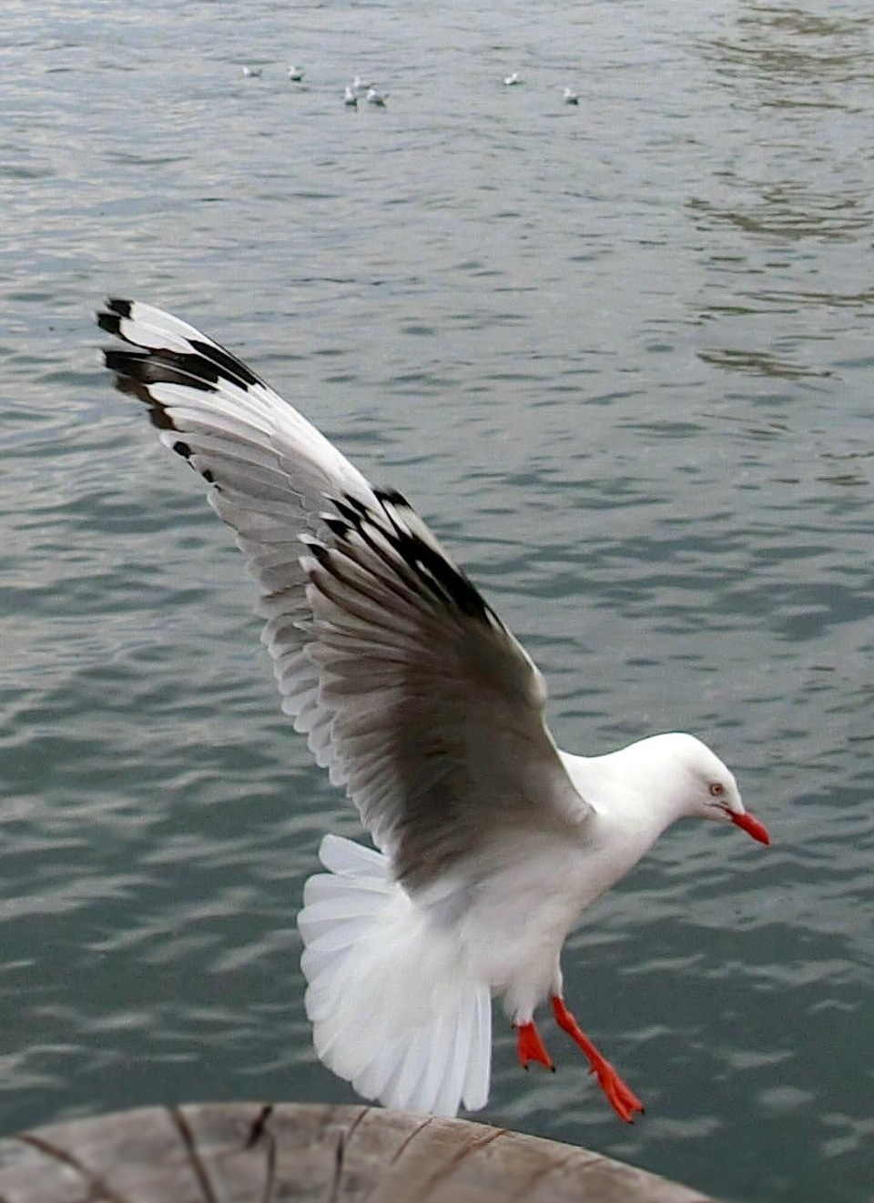Seagull-3 by pop88123