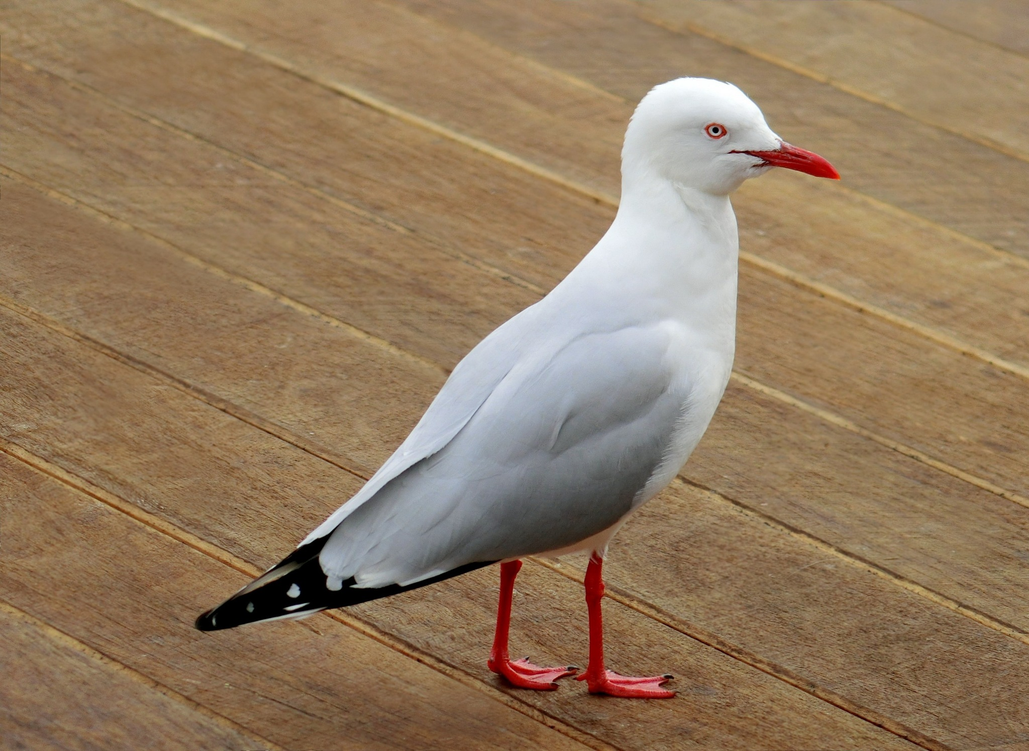 Seagull-2 by pop88123