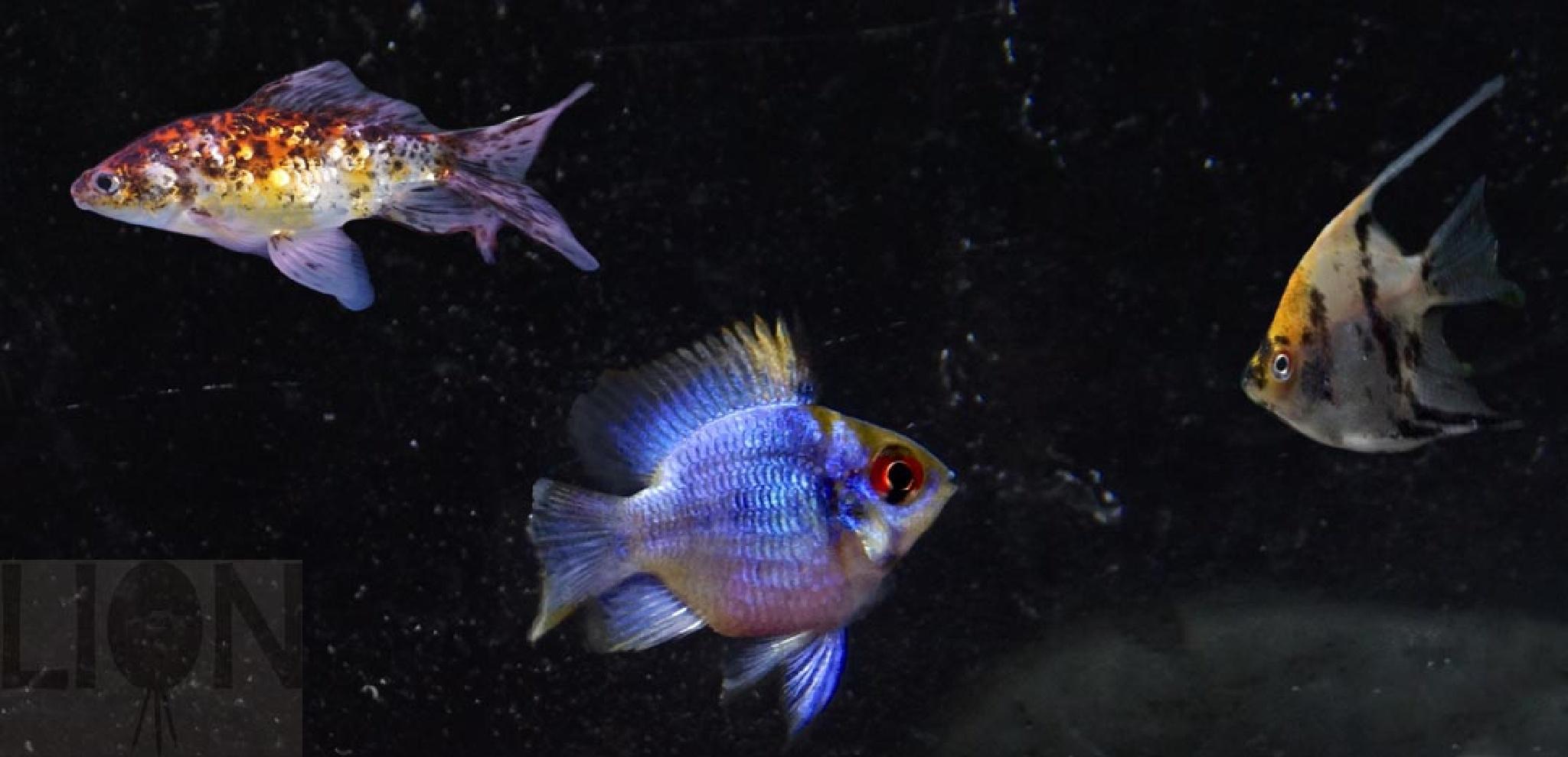 Aquarium by Barry Phillips