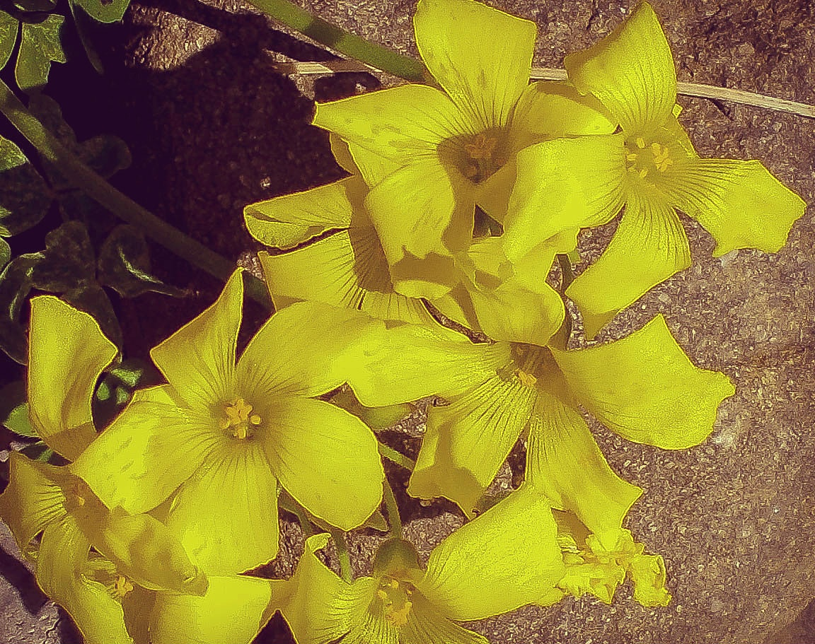 Photo in Nature #nature #plant #flower