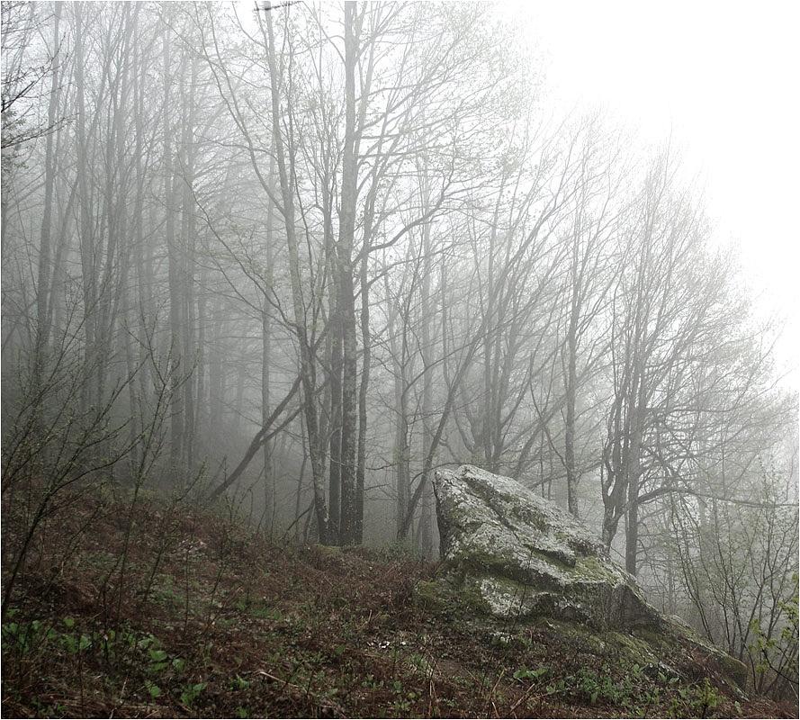 In the fog by Sergey Pavlov