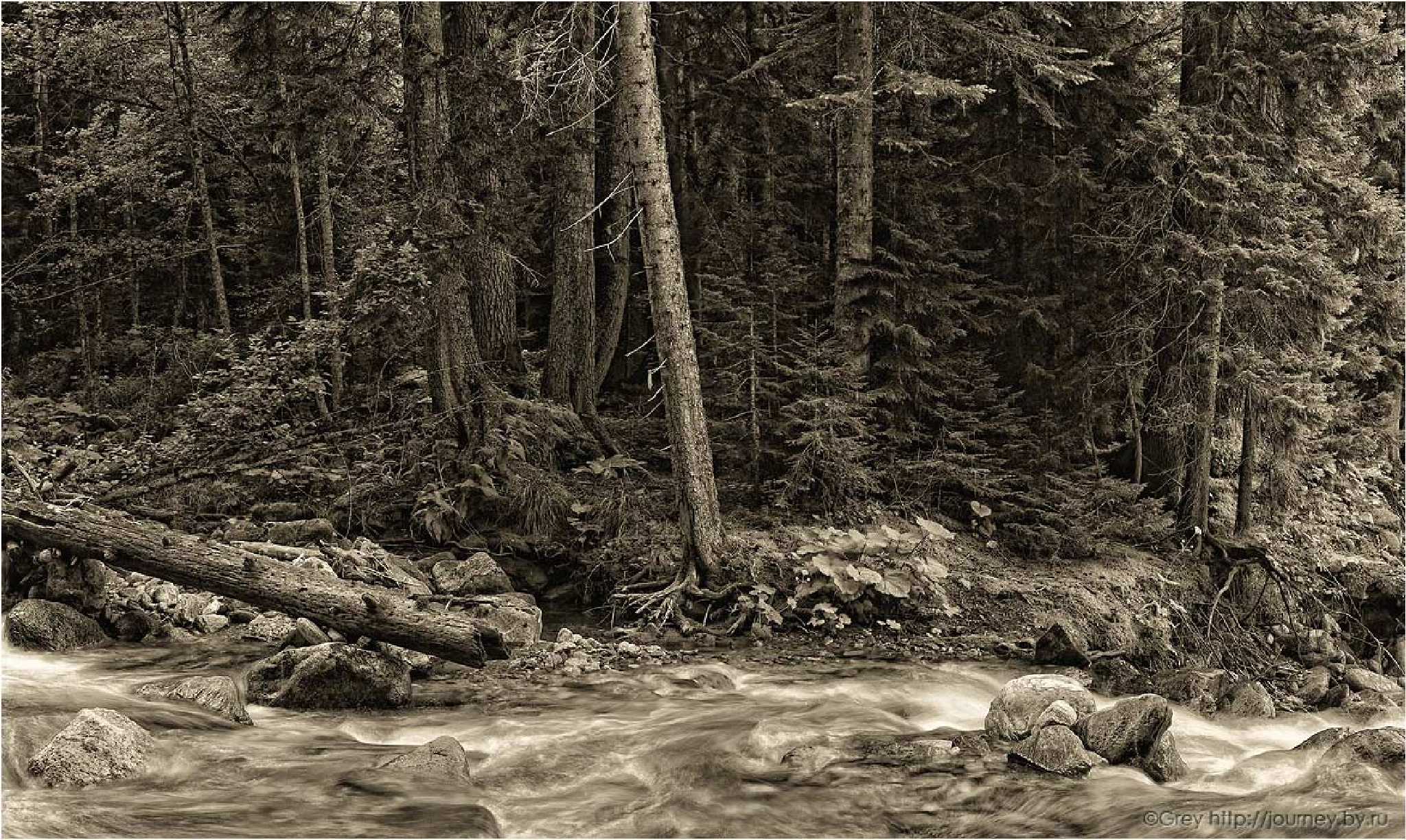 Wilderness nature reserve by Sergey Pavlov