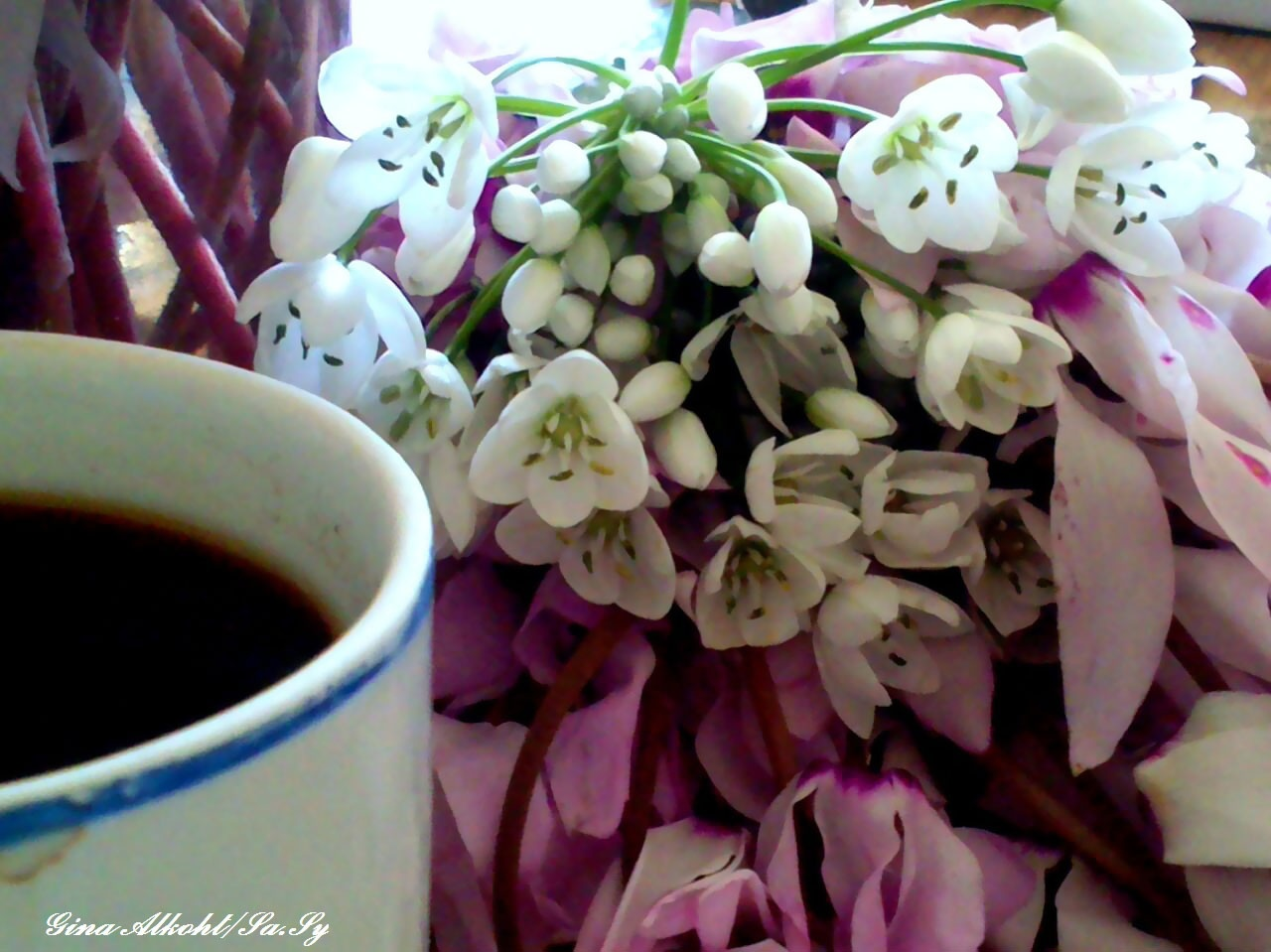 the morning coffee - goodmorning by Gina Alkoht
